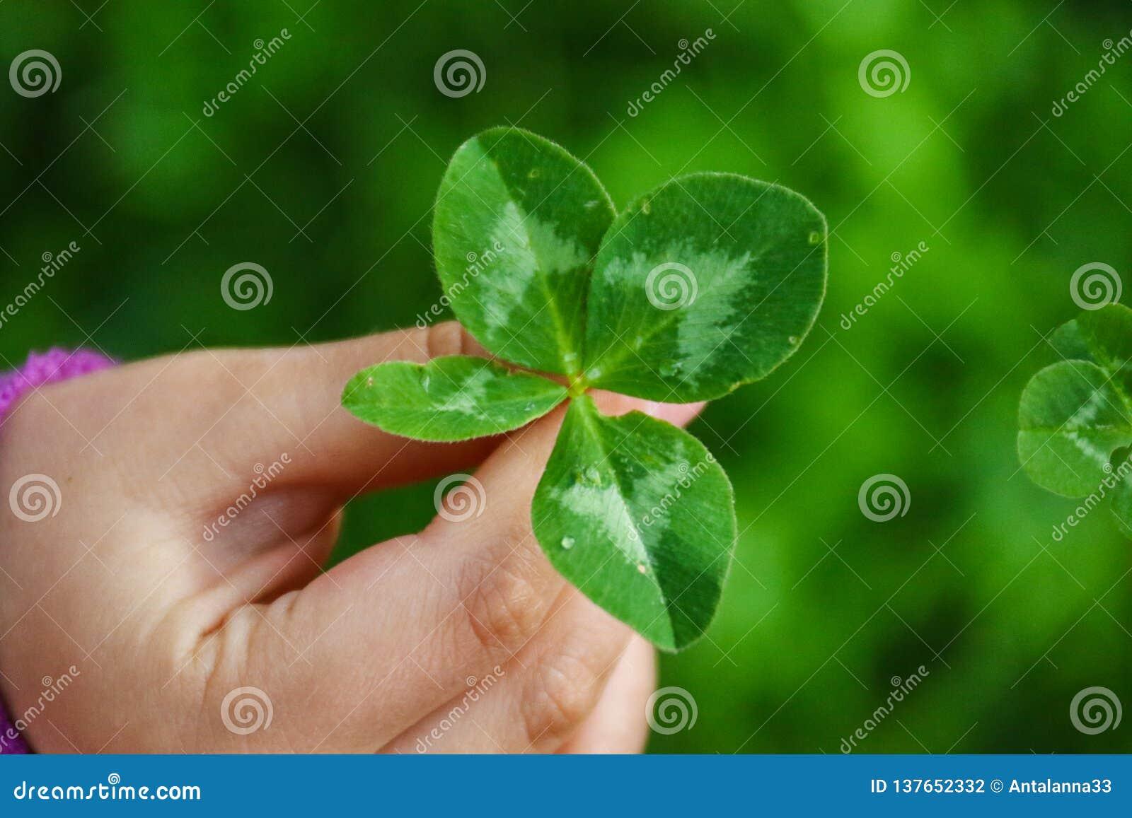 Uma menina que guarda um trevo de quatro folhas