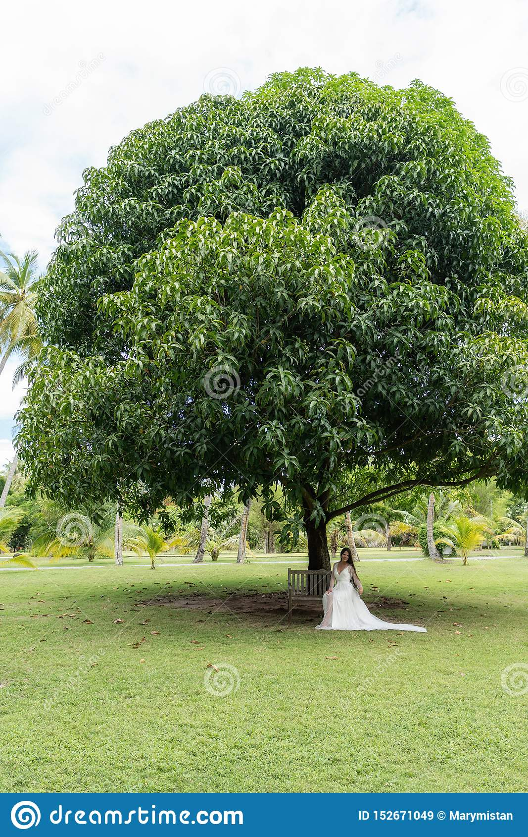 Uma noiva em um vestido branco está sentando-se em um banco velho sob uma árvore tropical enorme