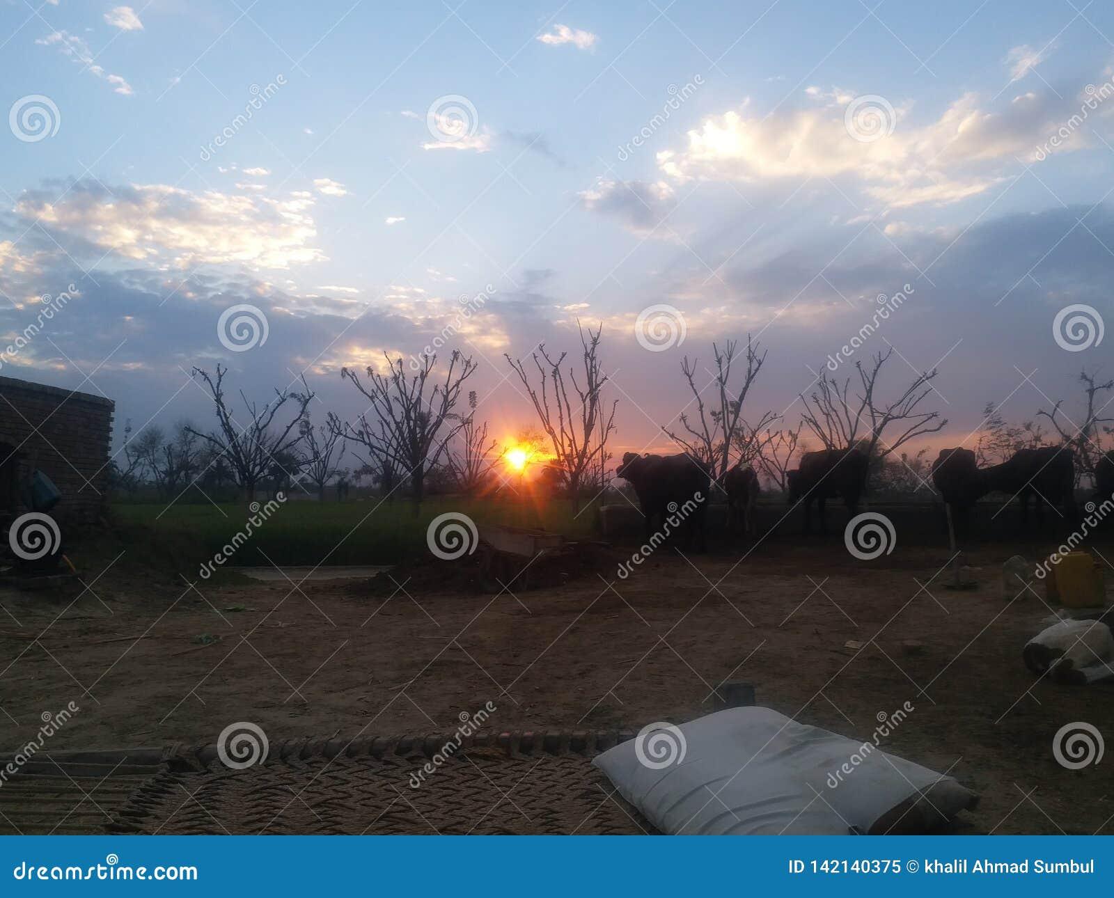 Uma opinião bonita do por do sol na área rural
