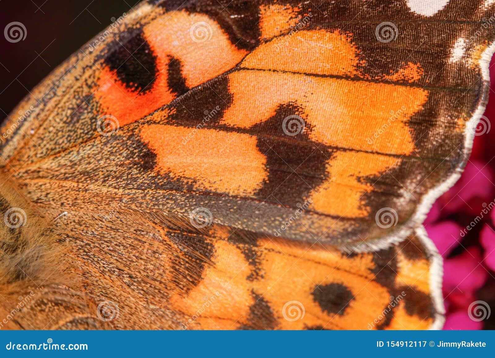 Uma opinião em uma asa alaranjada da borboleta, textura agradável do close-up - tiro macro