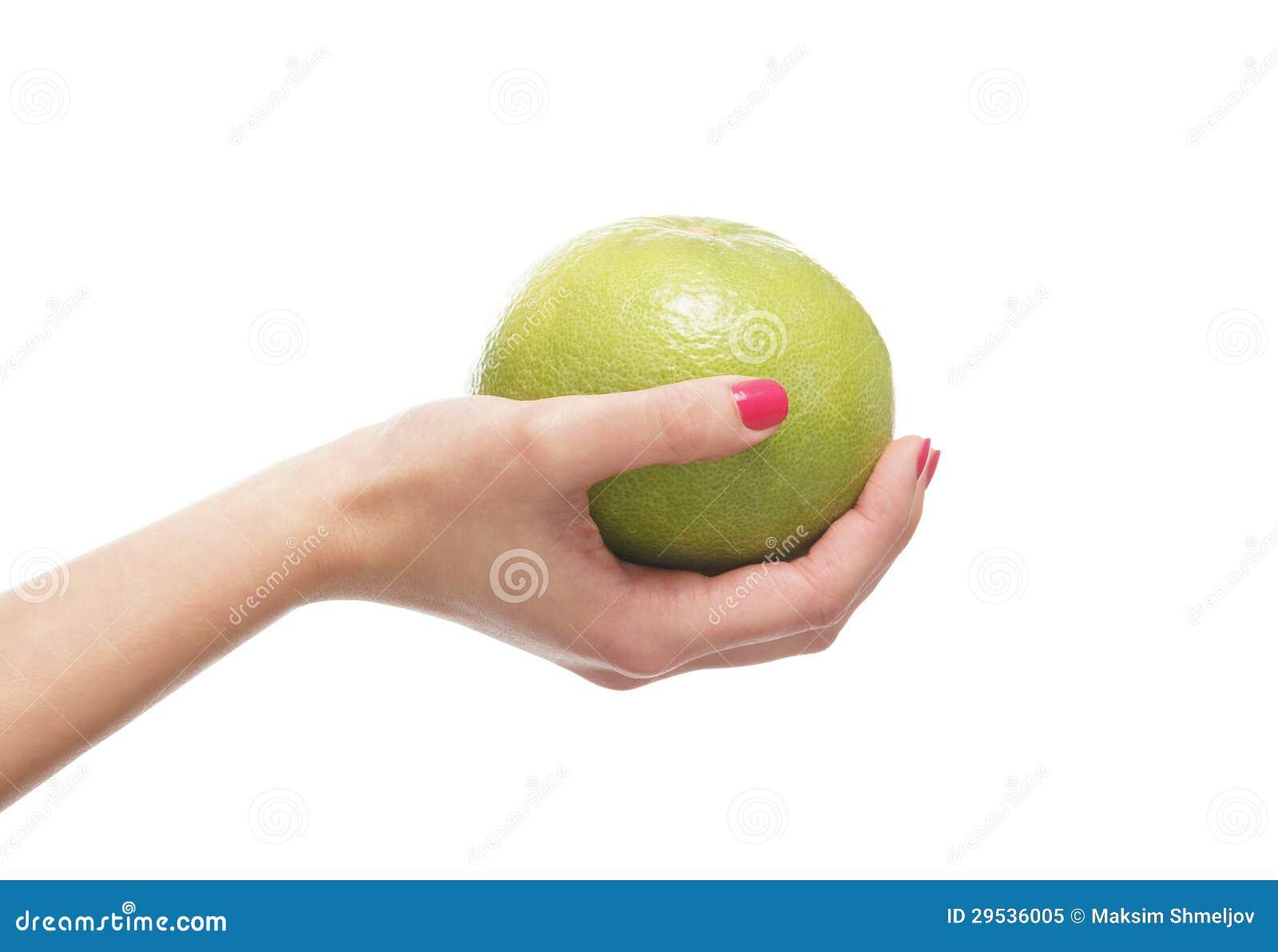 Uma pamplumossa fresca realizada nas mãos fêmeas bonitas no branco
