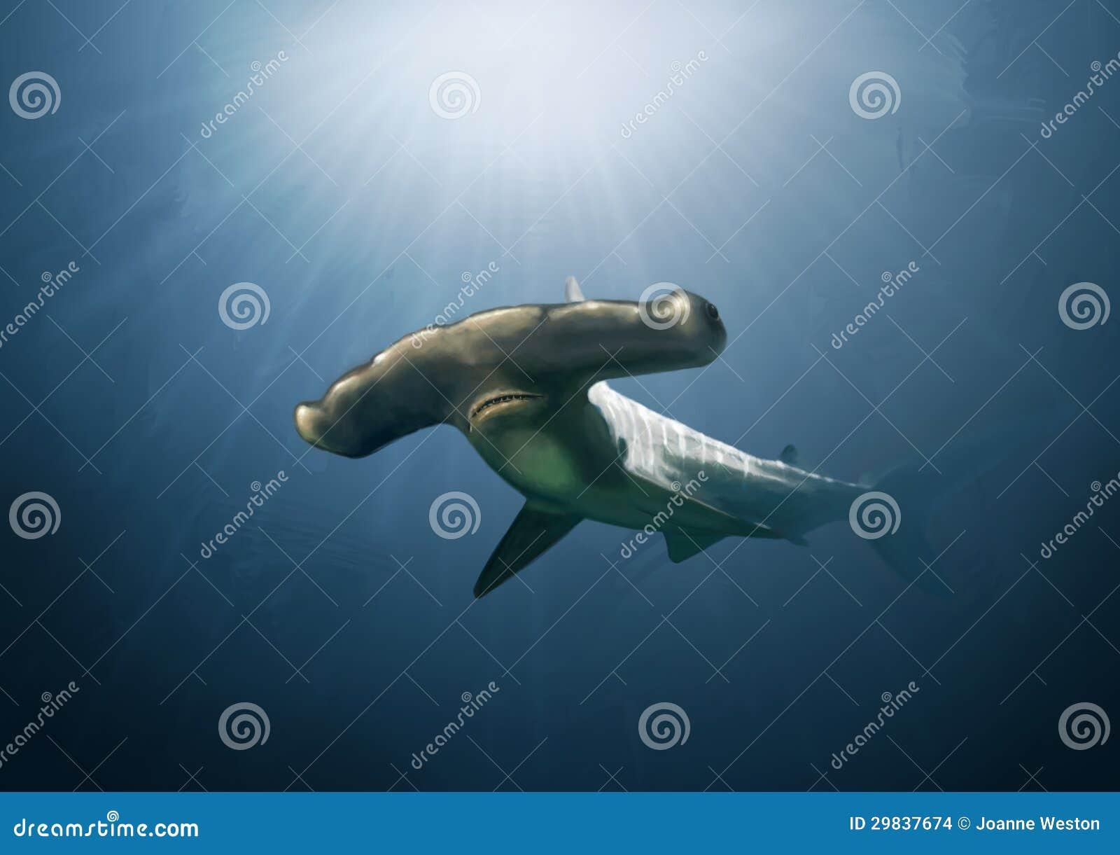 Pintura do tubarão de Hammerhead