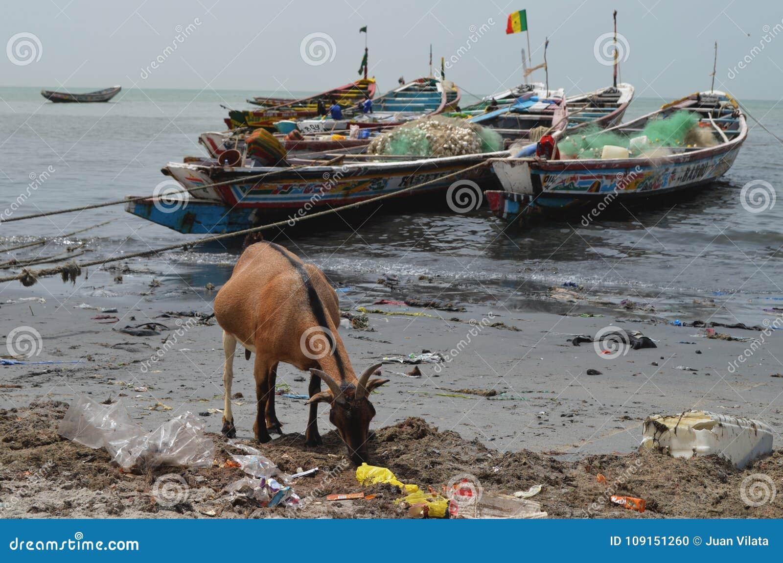 Uma praia coberta pela maca plástica no pequeno CÃ te de Senegal, África ocidental