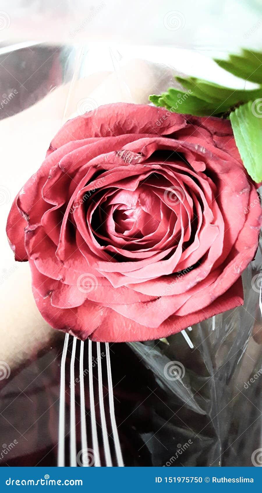 Uma rosa para o aum aumentou