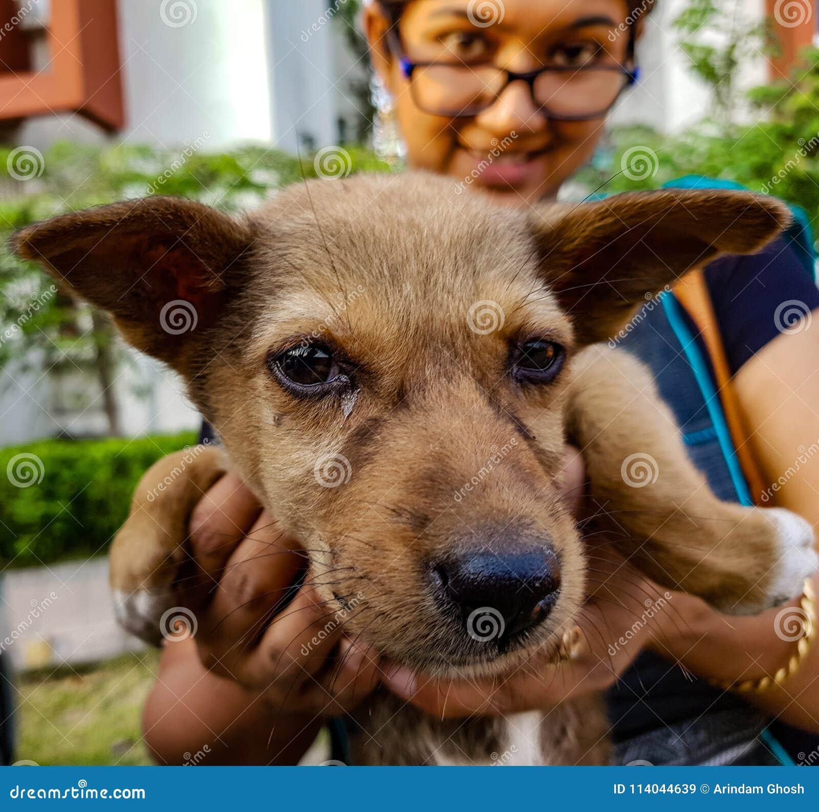 Uma senhora que guarda um cachorrinho indiano da rua que enfrenta a câmera que mostra o anim