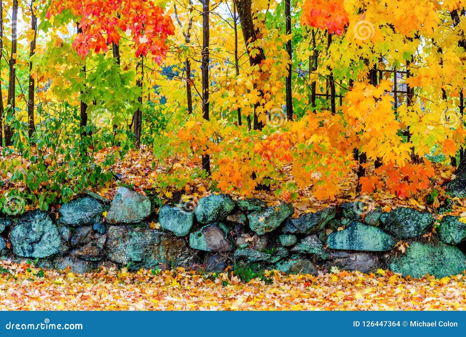 Uma tarde do outono em Massachusetts suburbano - 6