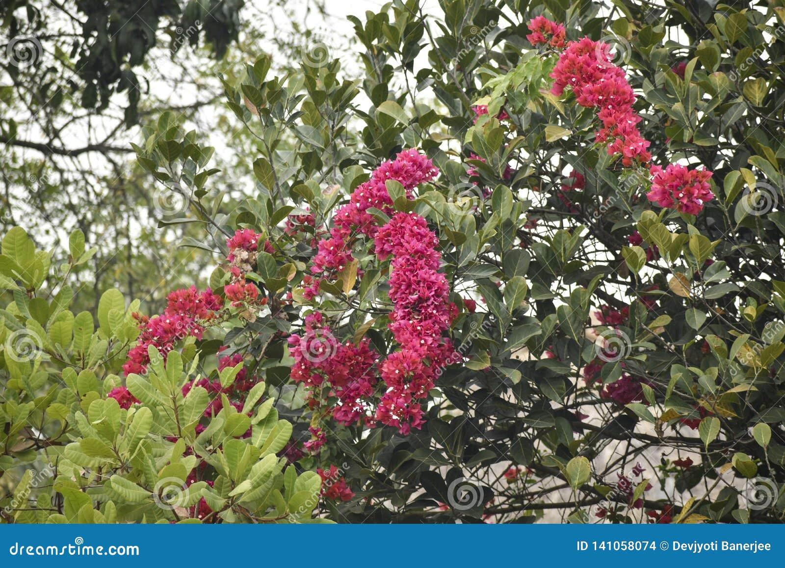 Uma textura colorida da flor vermelha e das folhas verdes