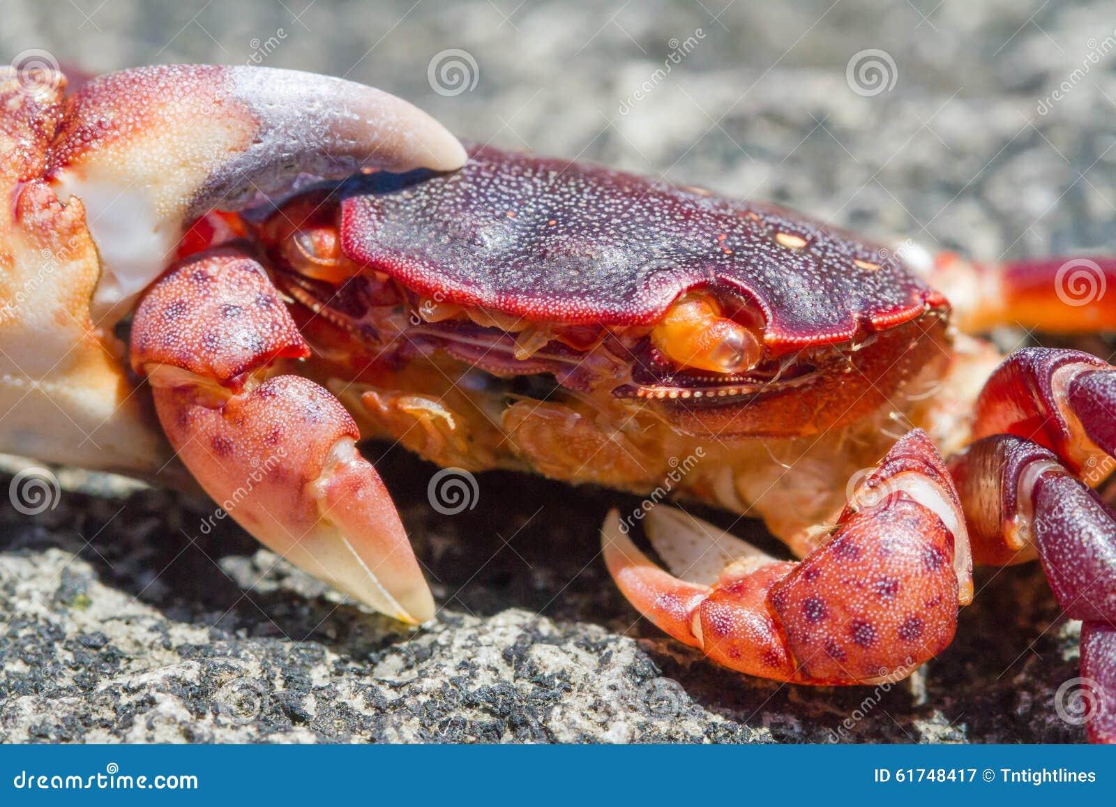 Uma vida Crabby