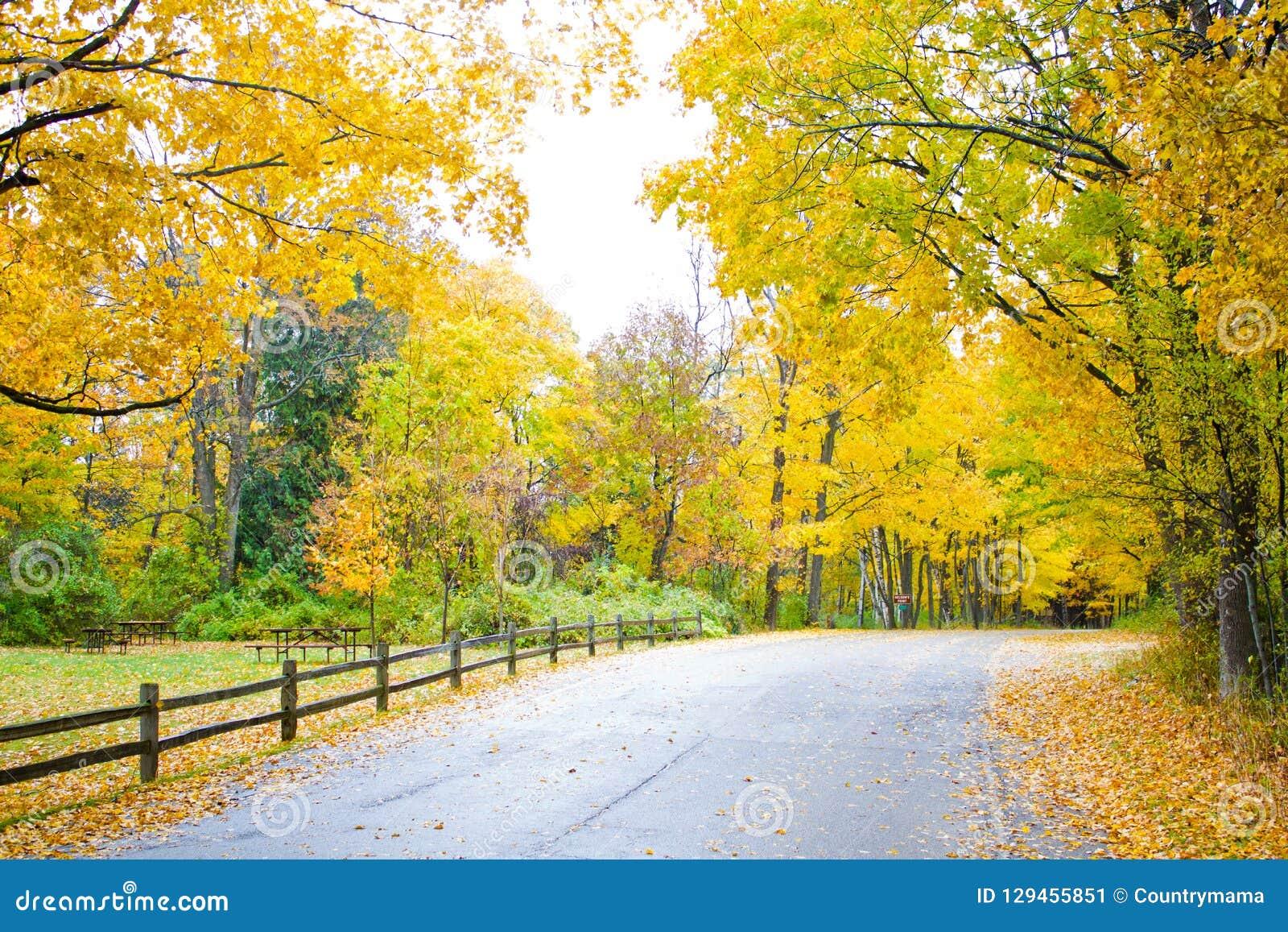 Uma vista cênico de uma cerca alinhou a estrada que entra na floresta do outono