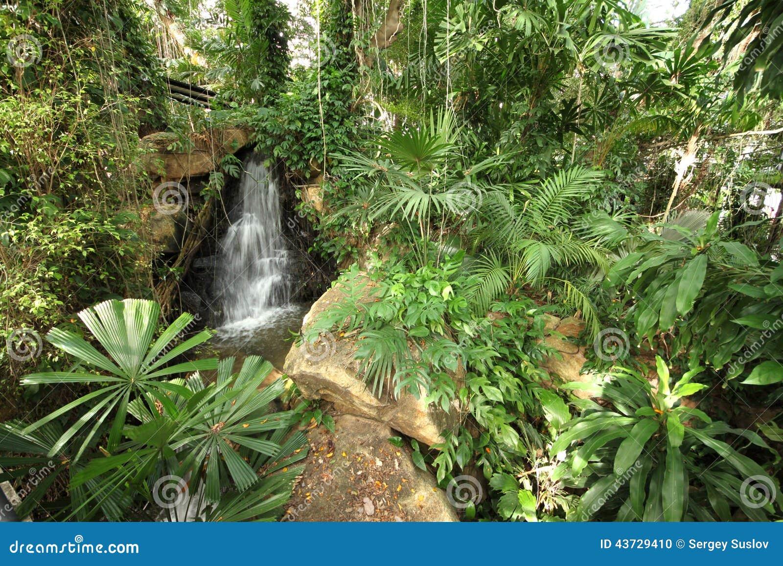 de um prado tropical com plantas e cachoeira e de pedras no jardim