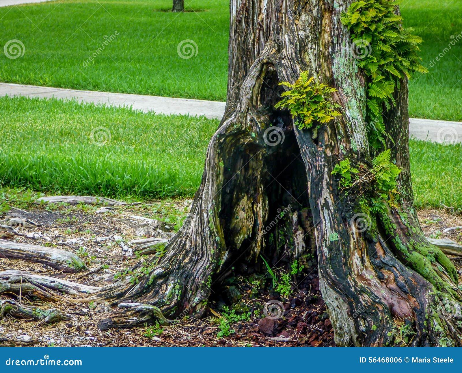 Un árbol asombroso en el parque