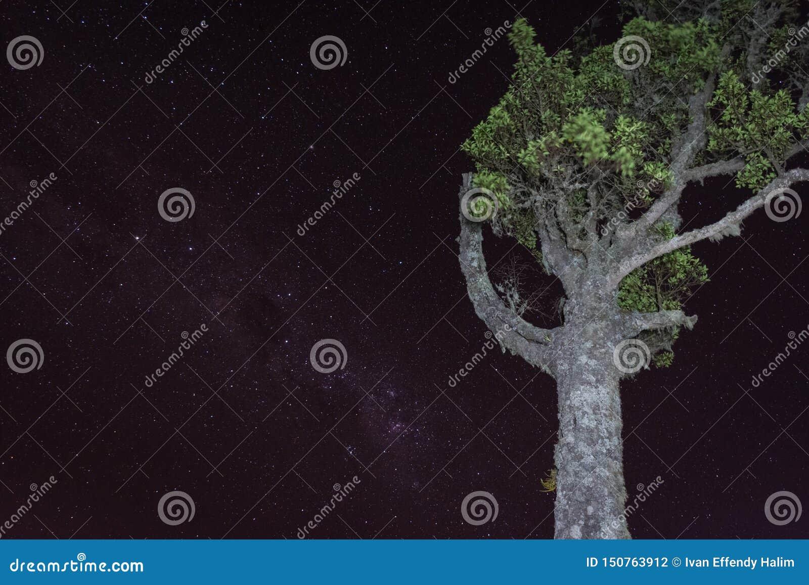 Un árbol con el fondo lleno de estrella en el soporte Raung del sitio para acampar 7 Raung es el más desafiador de los rastros de