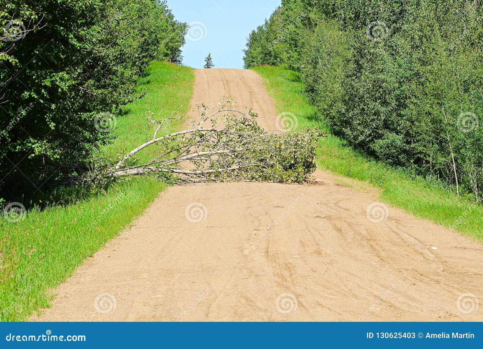 Un árbol En El Medio Del Camino Que Causa Una Obstrucción Imagen De Archivo Imagen De Bosque Grava 130625403