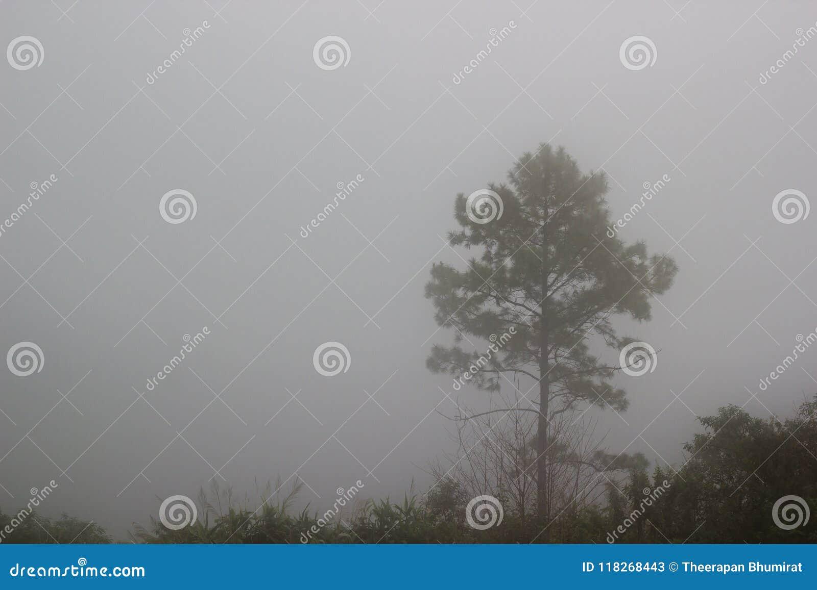 Un árbol que se coloca solamente en de niebla Fondo del misterio