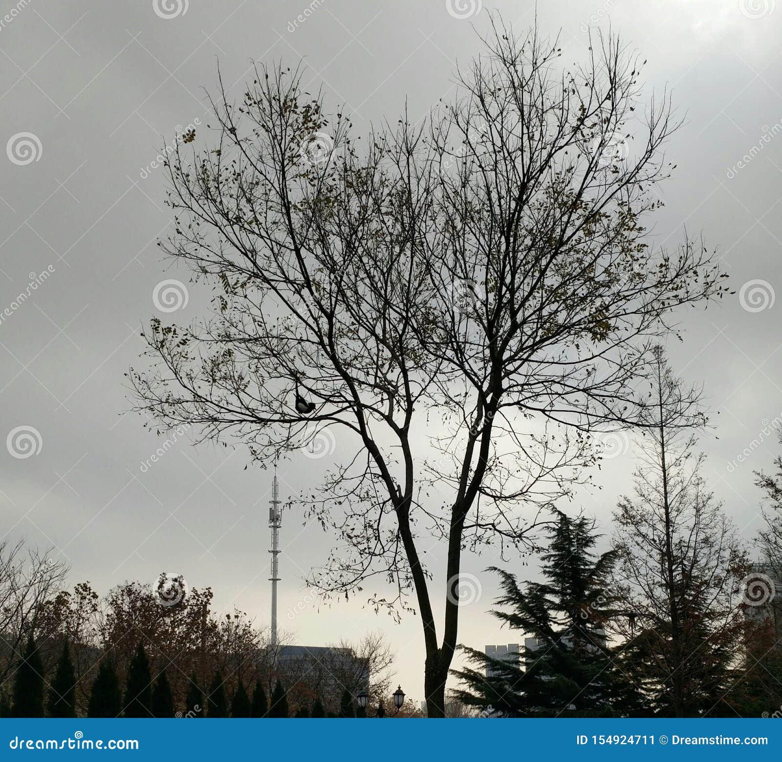 Un árbol y una urraca