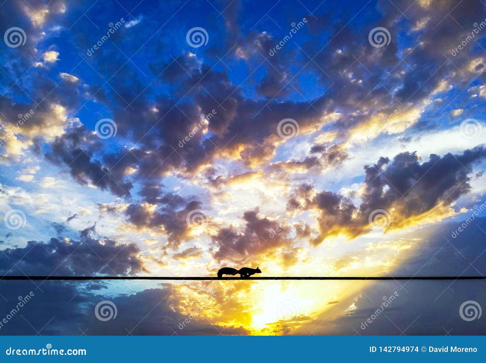 Un écureuil fonctionnant au-dessus d un fil électrique contre le coucher du soleil