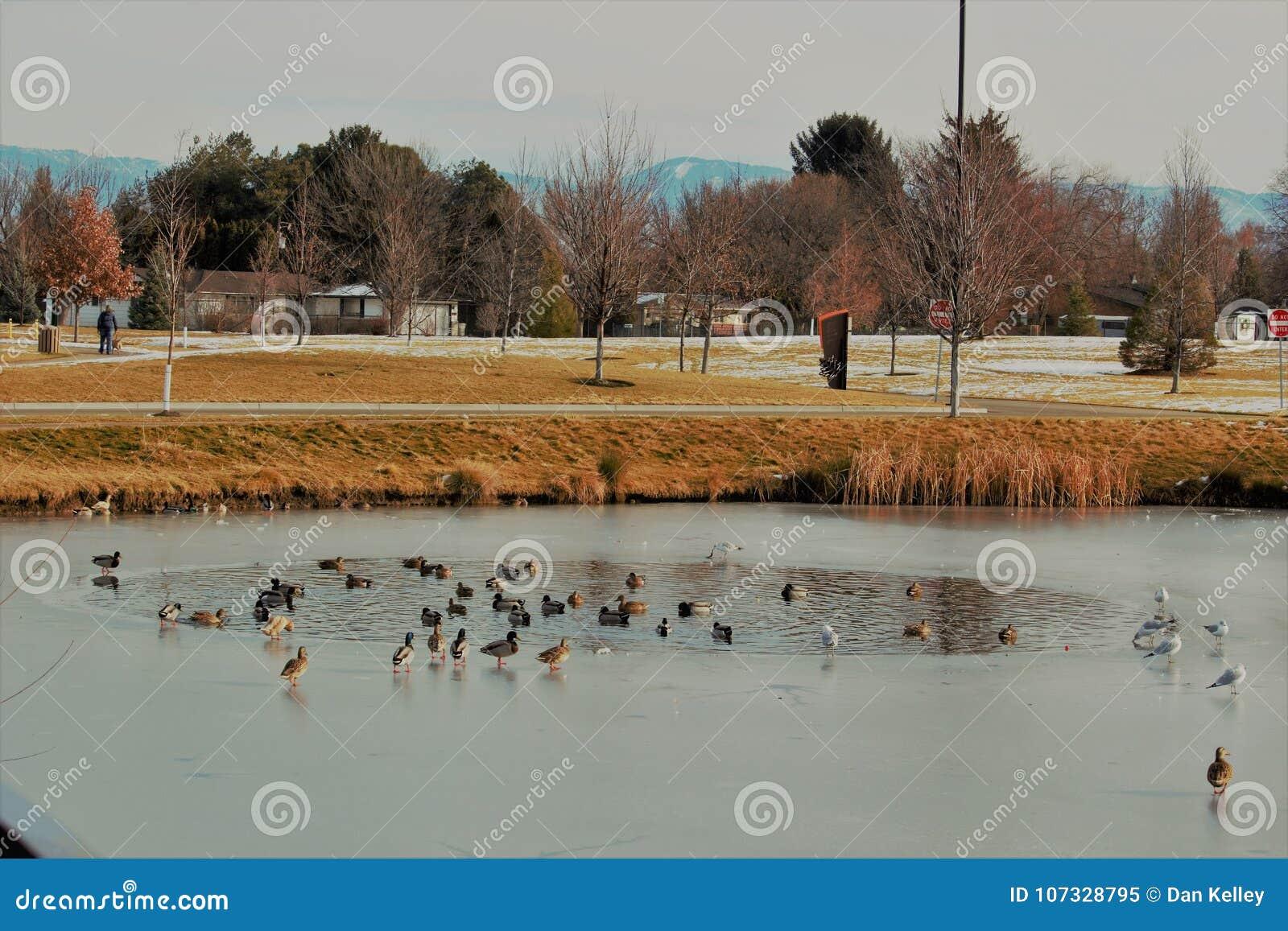 Un étang dans un étang chez Jules M Parc commémoratif de Kleiner en Boise Idaho