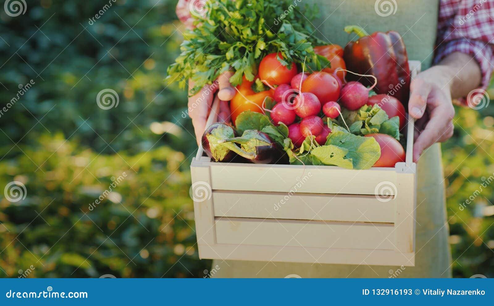 Un agriculteur tient une boîte de radis et d autres légumes saisonniers