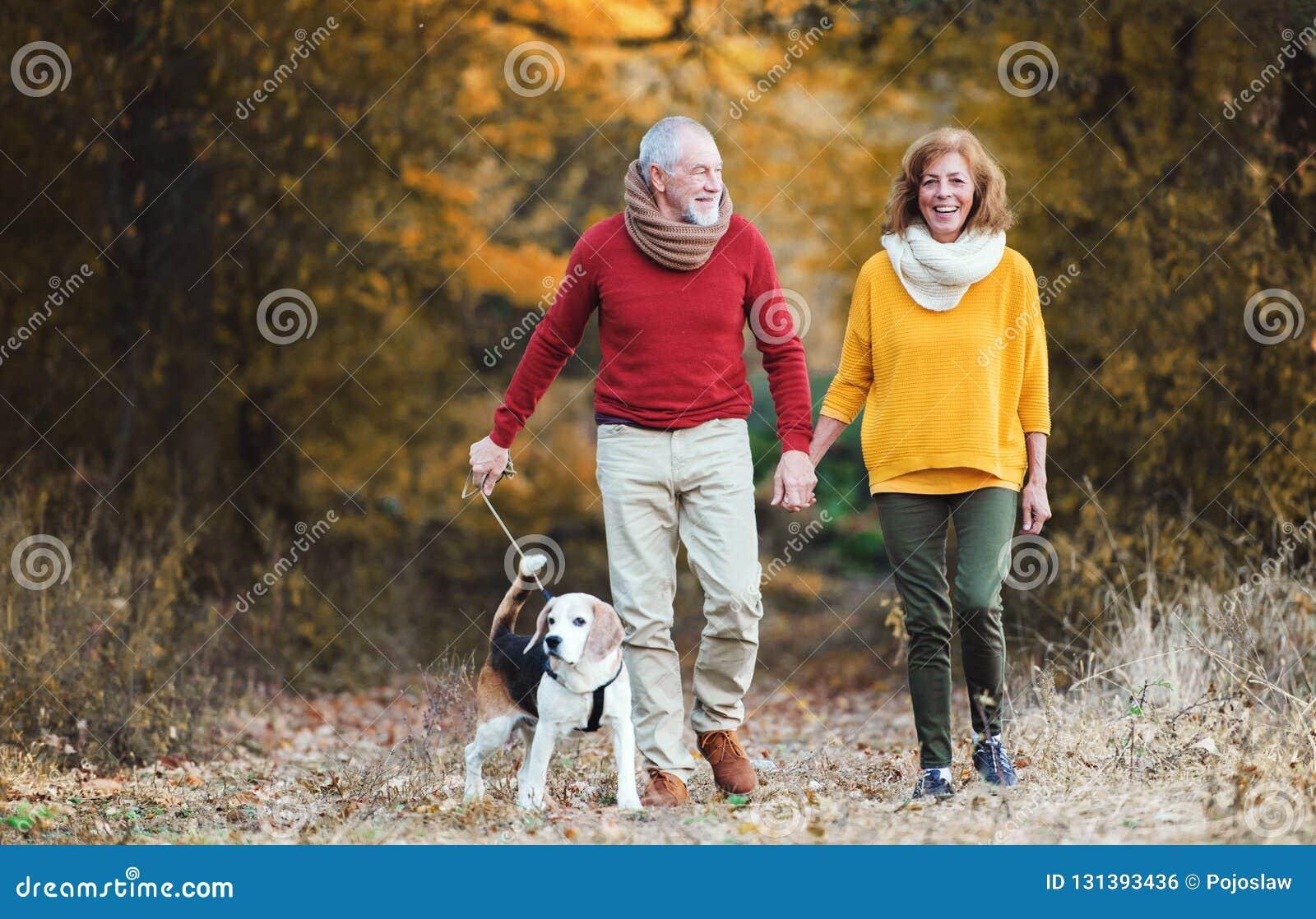 Un ajouter supérieur à un chien sur une promenade dans une nature d automne