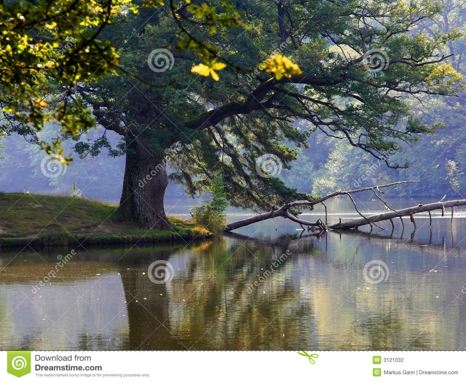 Un albero nel lago selvaggio.