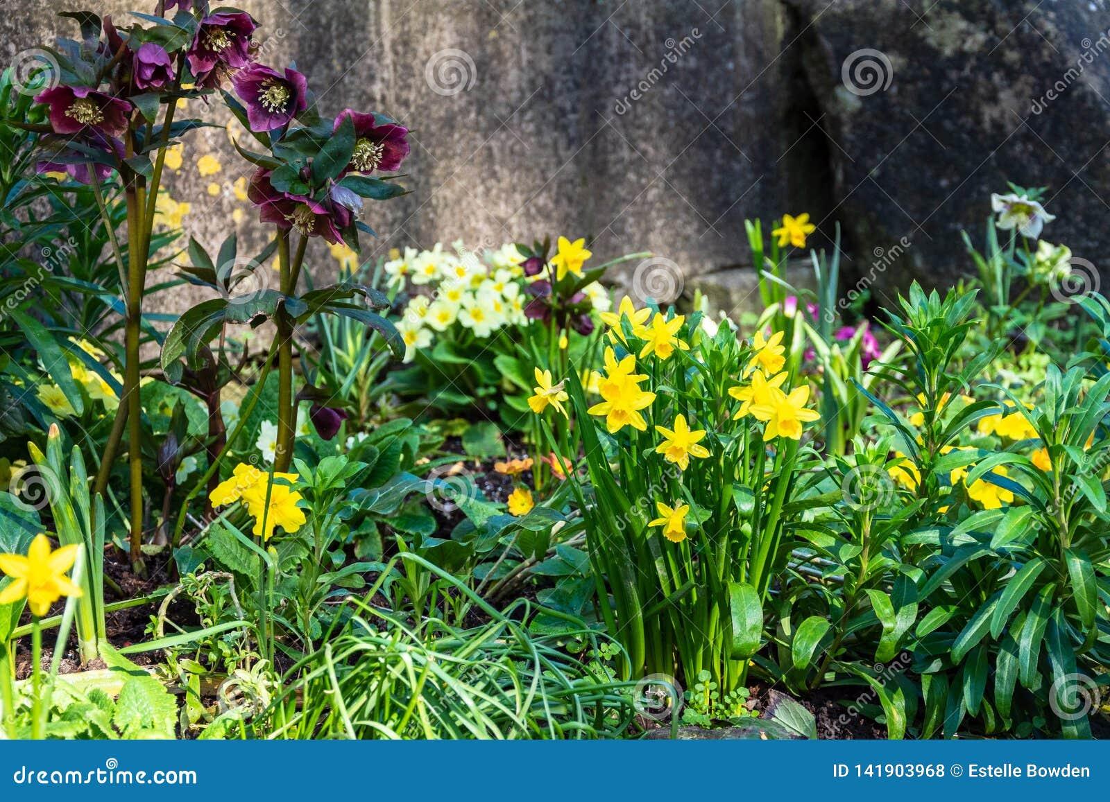 Un angolo ombreggiato piccolo con i fiori della molla compreso i narcisi e gli elleboro