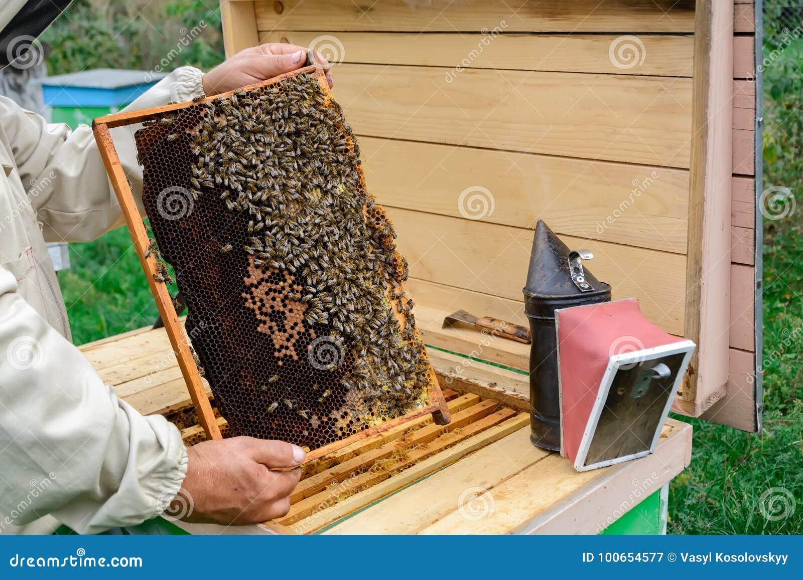 Un apiculteur à la ruche regarde au-dessus d un nid d abeilles avec des abeilles rucher