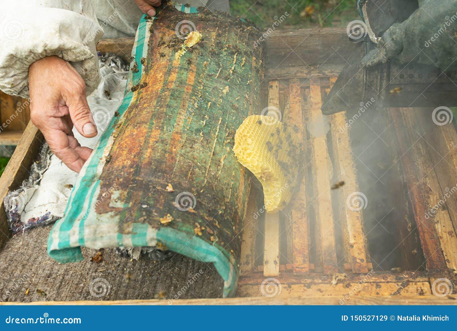 Un apiculteur vérifie les cadres de ruche et de miel des abeilles Travail de l apiculture sur le rucher Foyer s?lectif