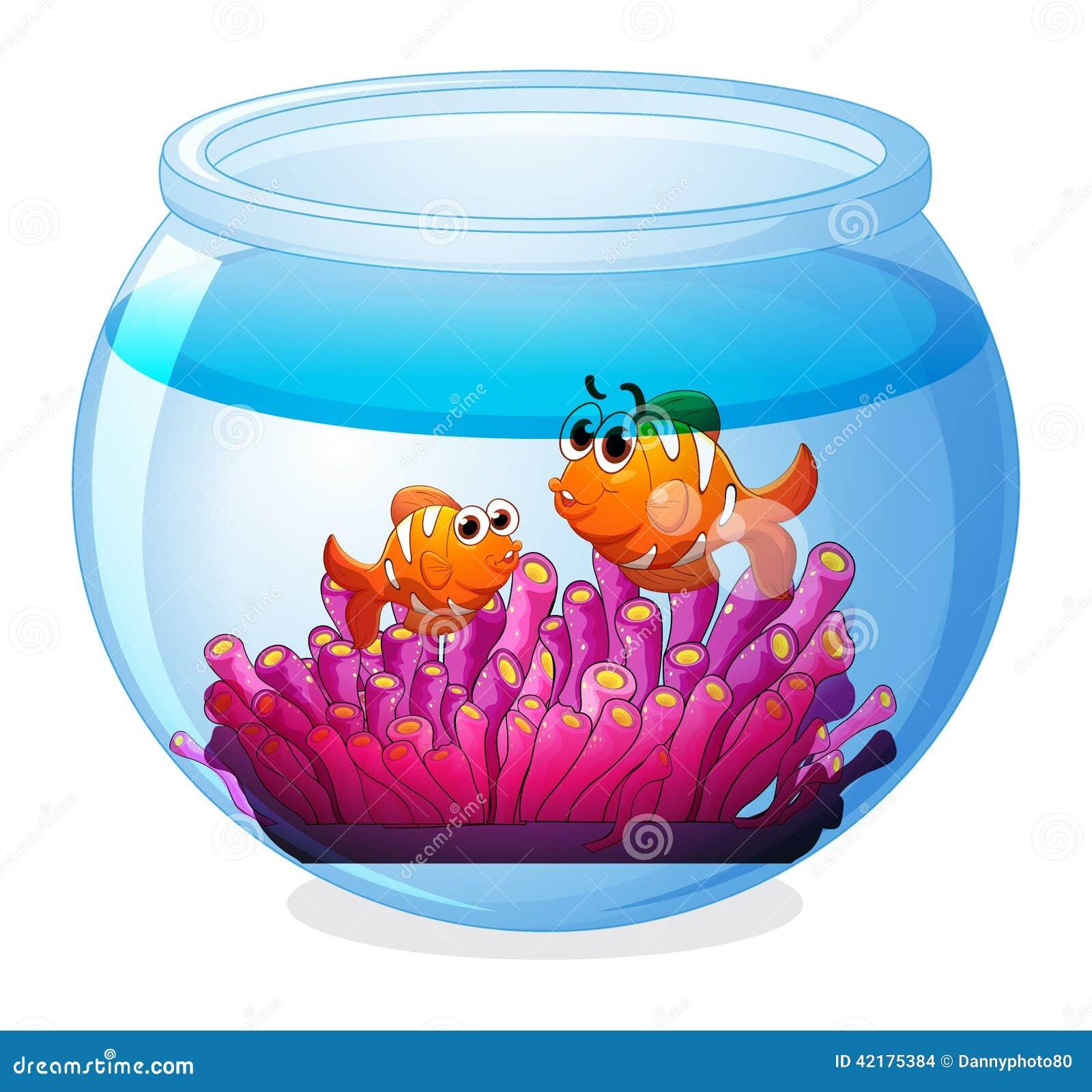 Un aquarium avec deux poissons oranges