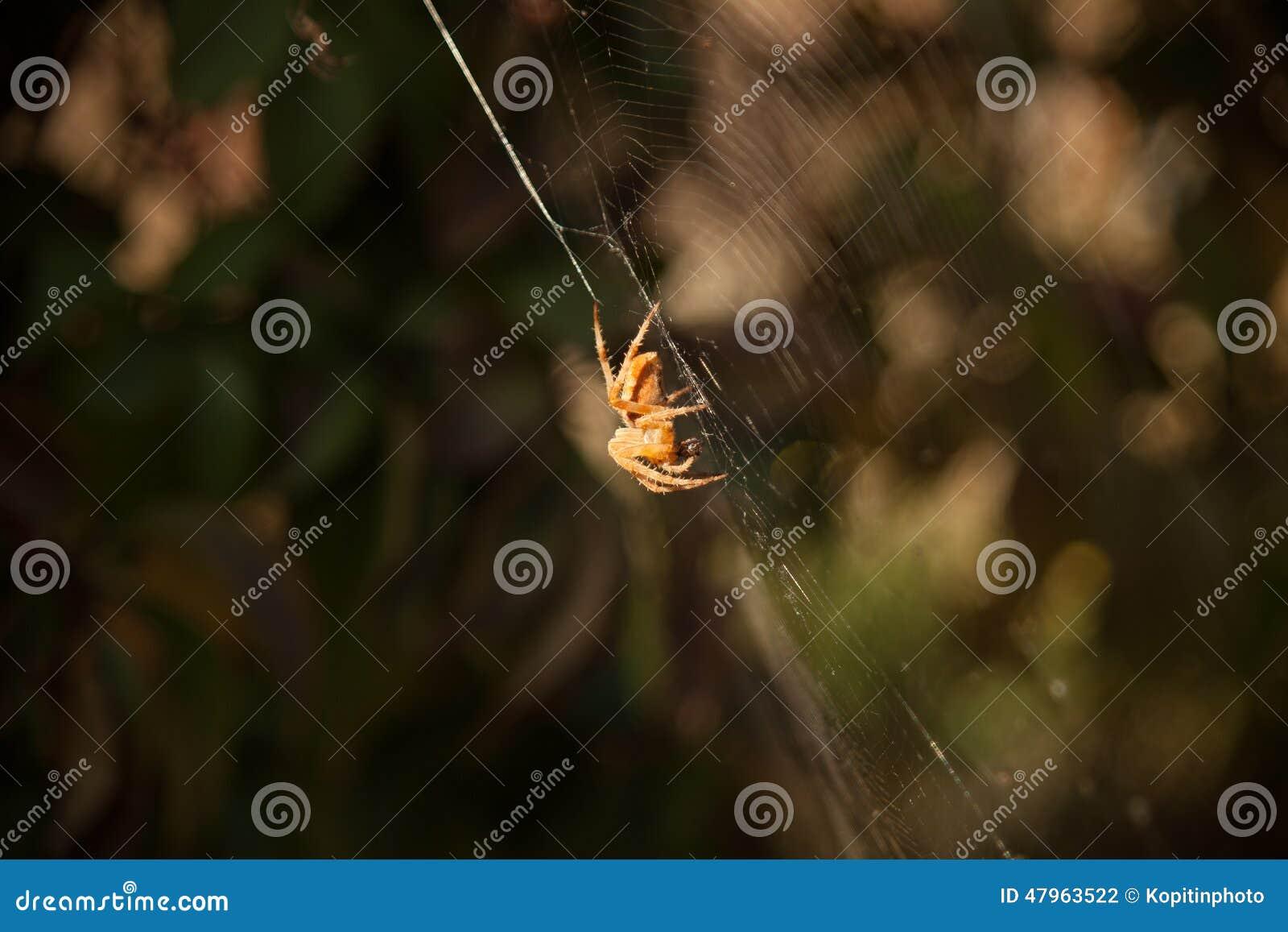 Un arachnide se repose dans sa tanière