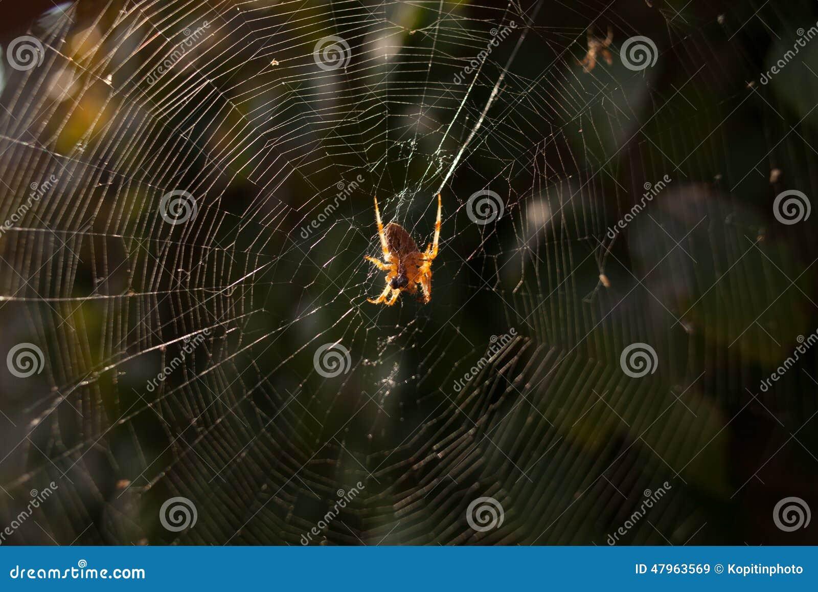 Un aracnide si siede nel suo lair