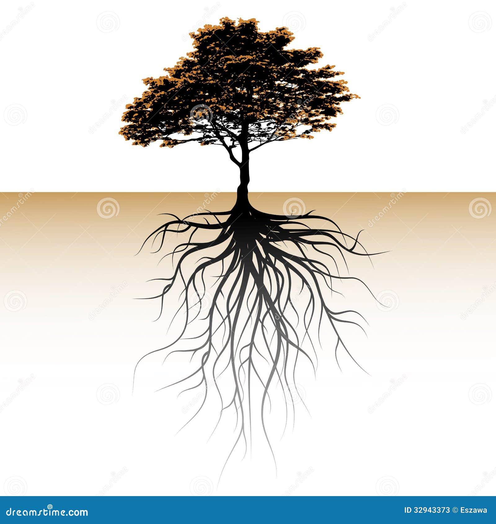 un arbre avec une racine vidente l 39 espace pour un texte photos stock image 32943373. Black Bedroom Furniture Sets. Home Design Ideas