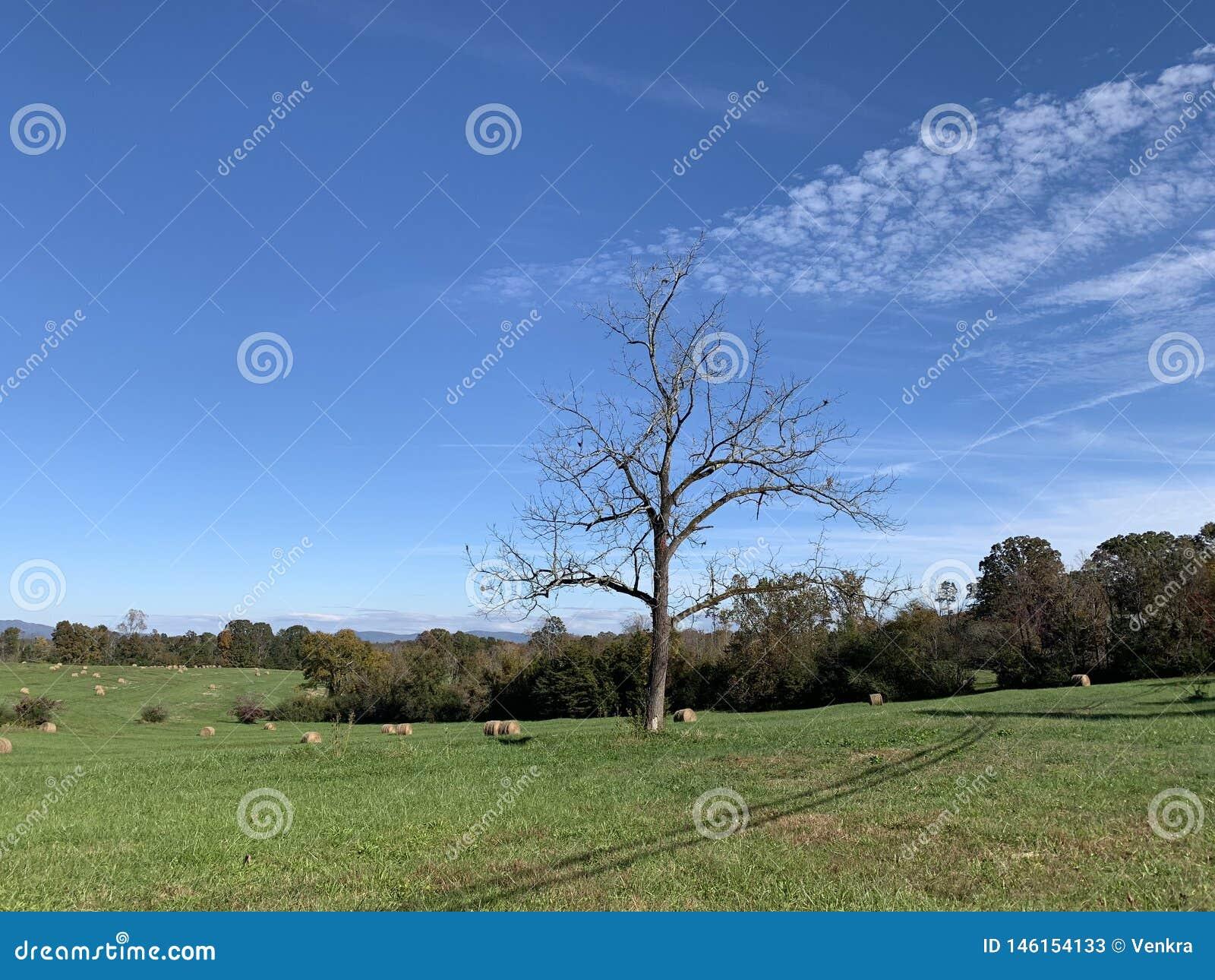 Un arbre isolé dans un paysage herbeux avec le ciel bleu et les nuages blancs