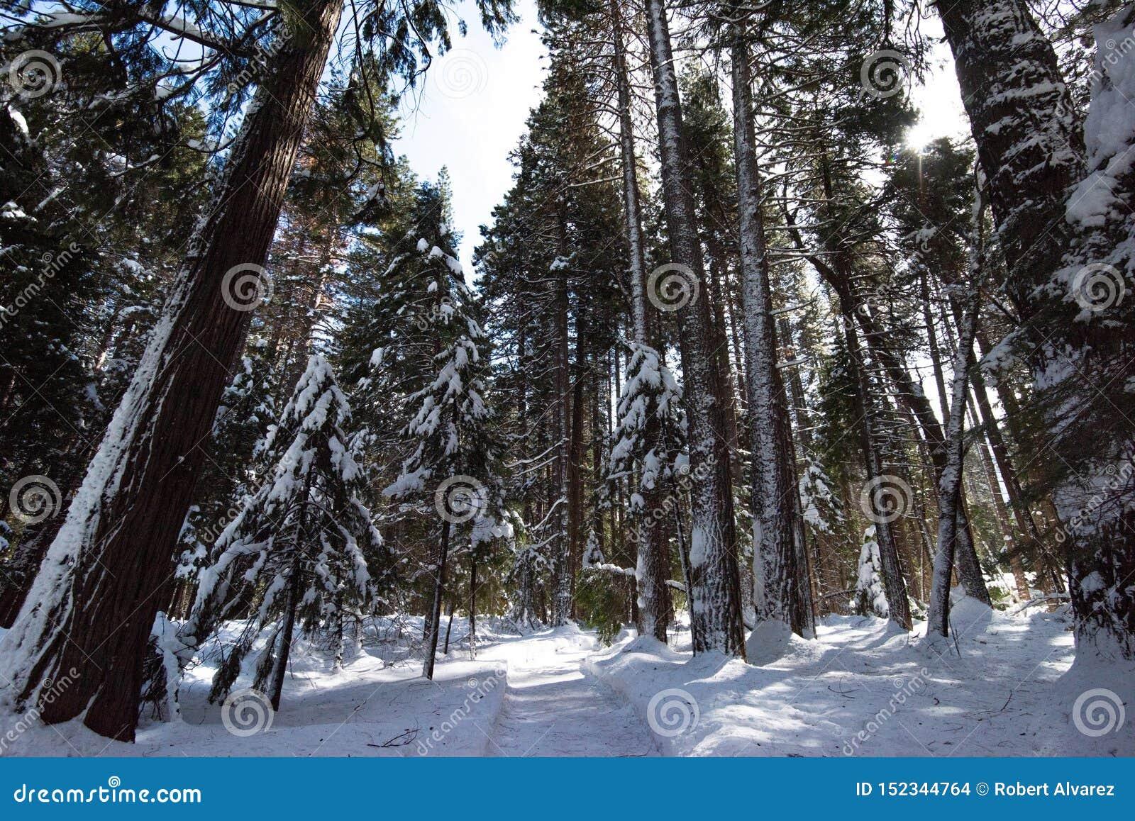 Un arbre a rayé le chemin bien que la forêt