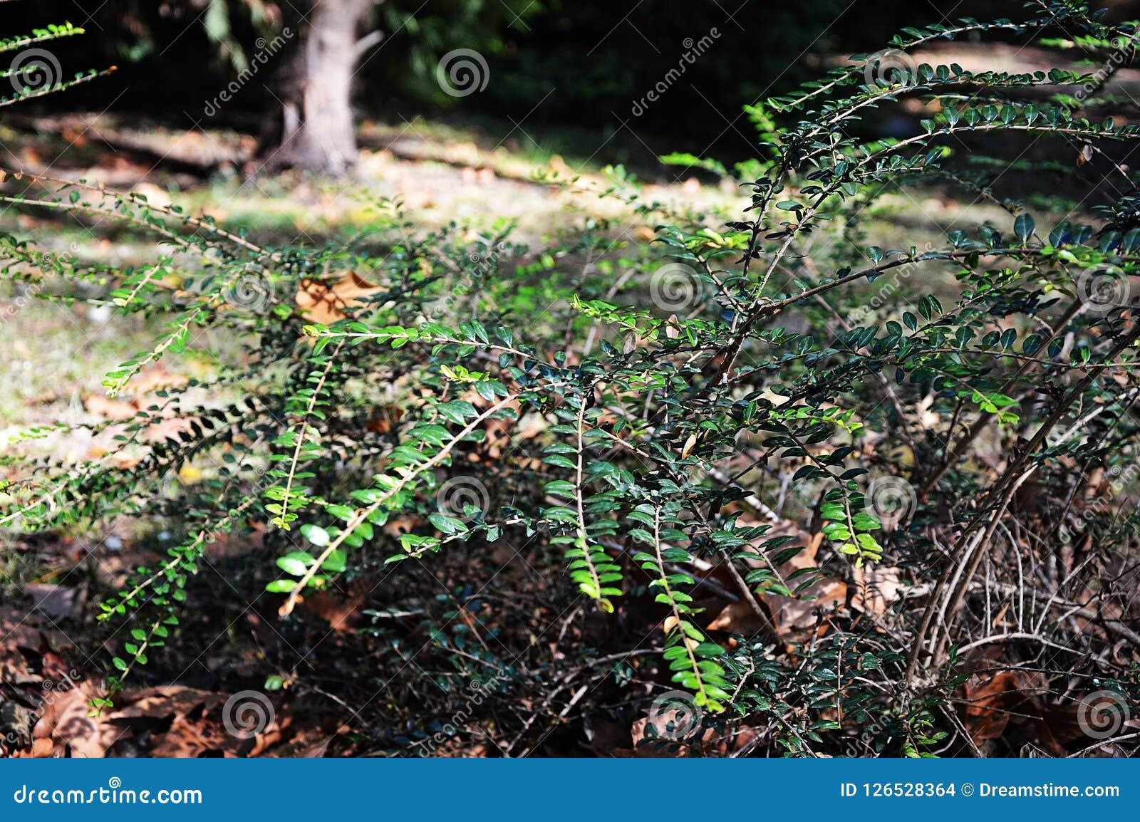 Un arbusto pintoresco en el claro