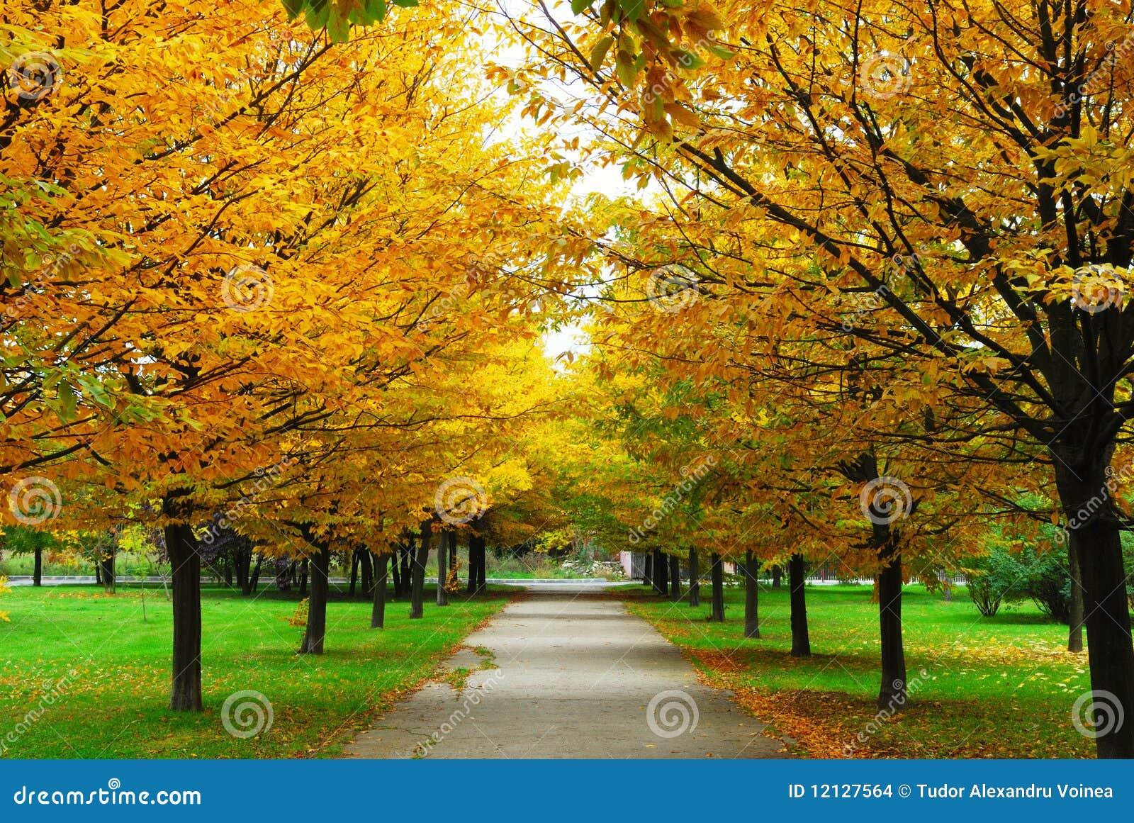 Un automne de ruelle