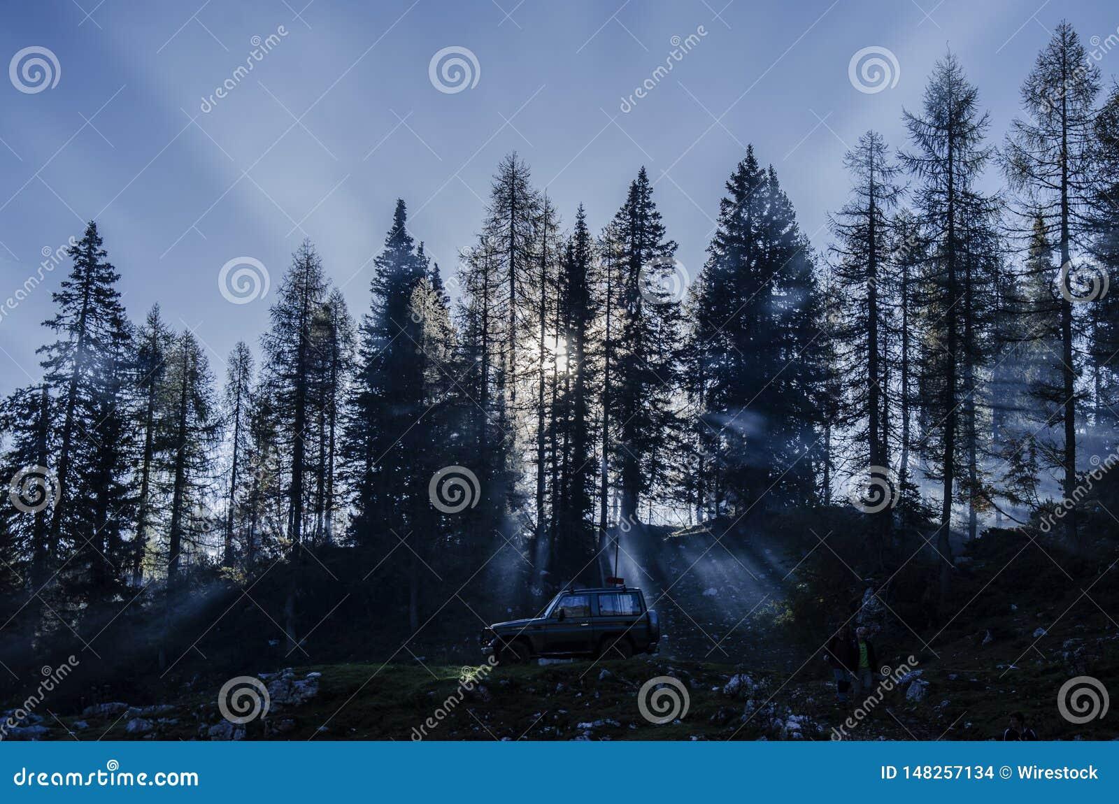 Un automobile 4x4 in una foresta con gli alberi alti con luce solare che splende da parte a parte