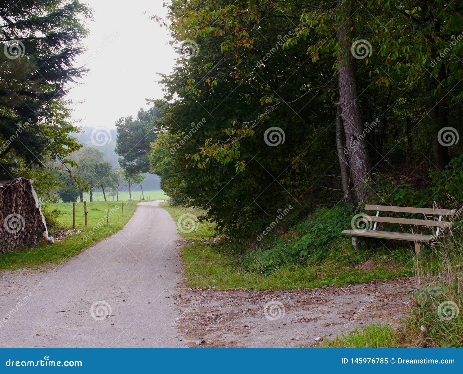 Un banc dans la forêt en Allemagne du sud