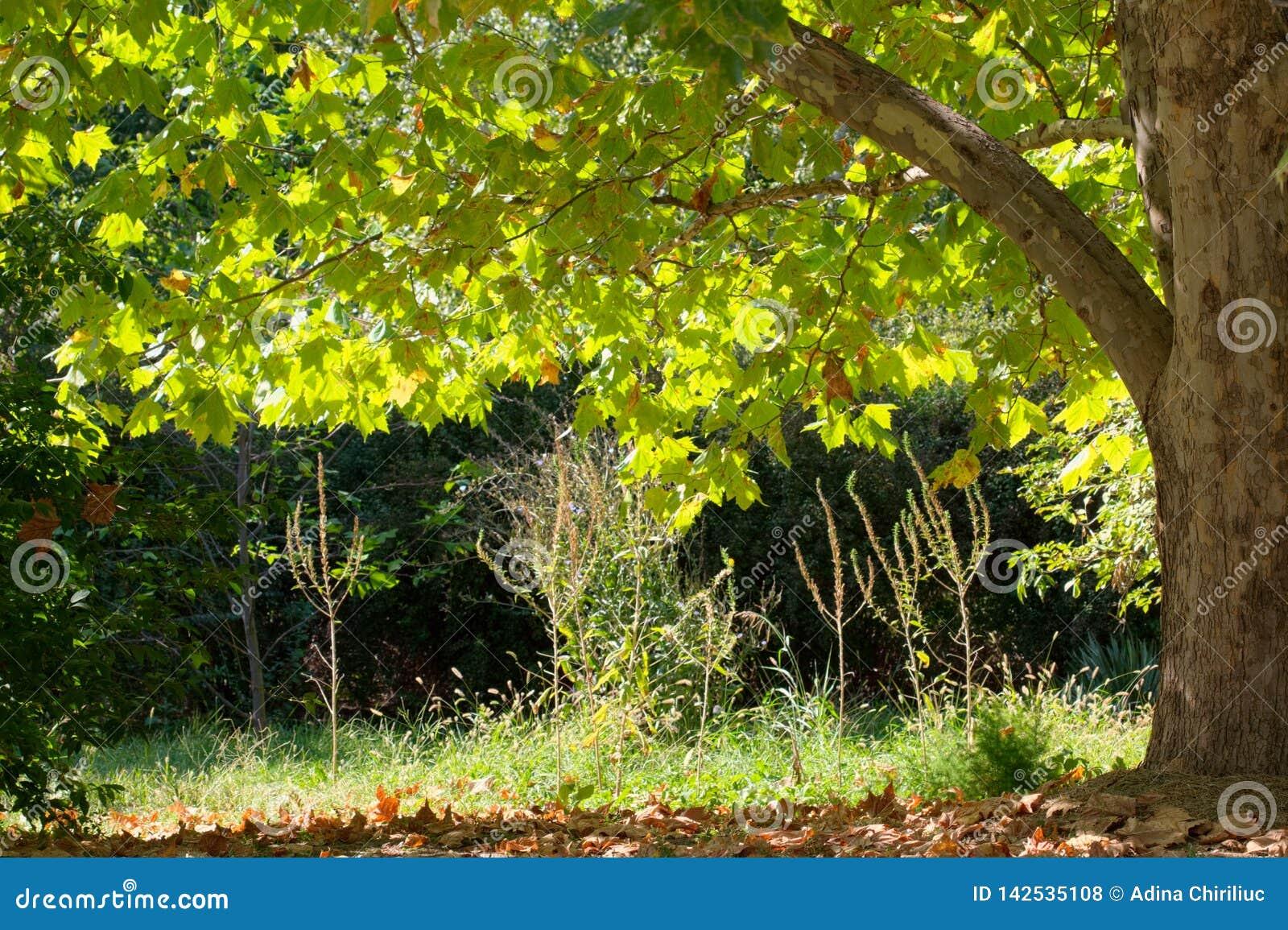 Un beau parc vif avec l arbre vert, fin