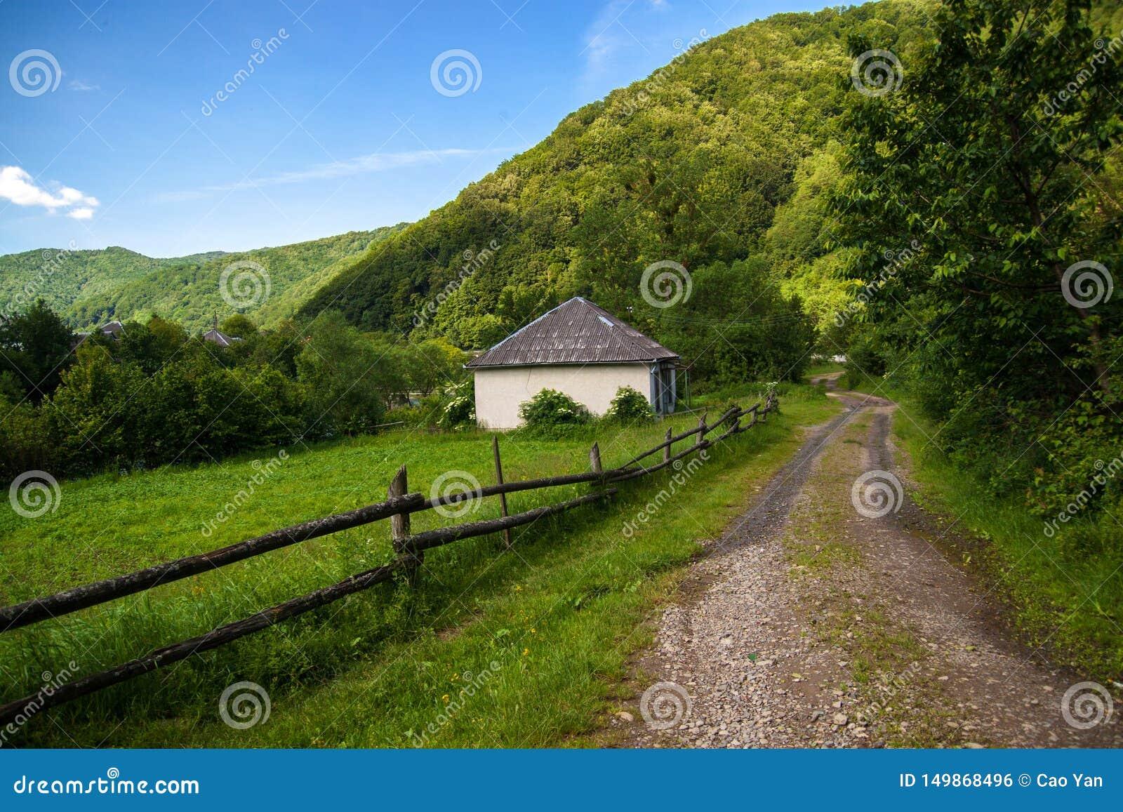 Un beau paysage de montagne d été - les Carpathiens