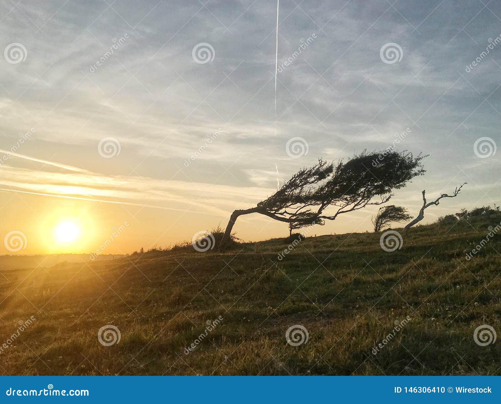 Un beau tir d un arbre obtenant le penchant par le vent violent