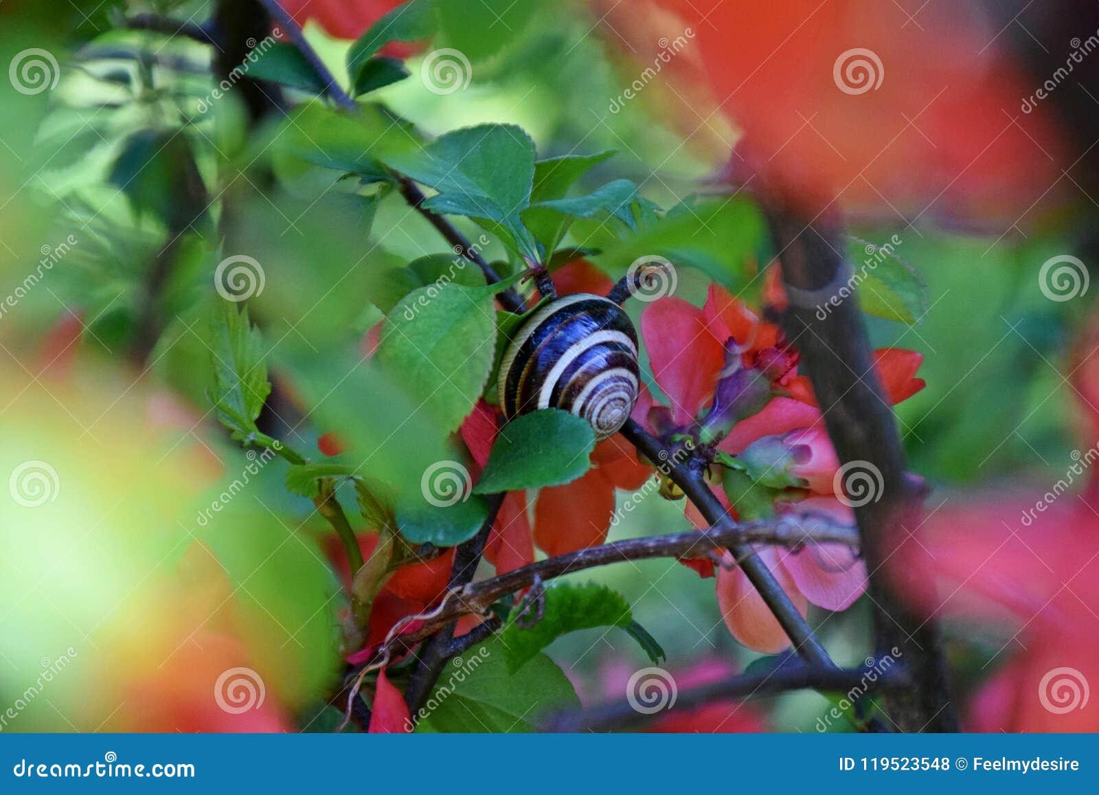 Un bel arbre a fleuri dans le jardin, ressort