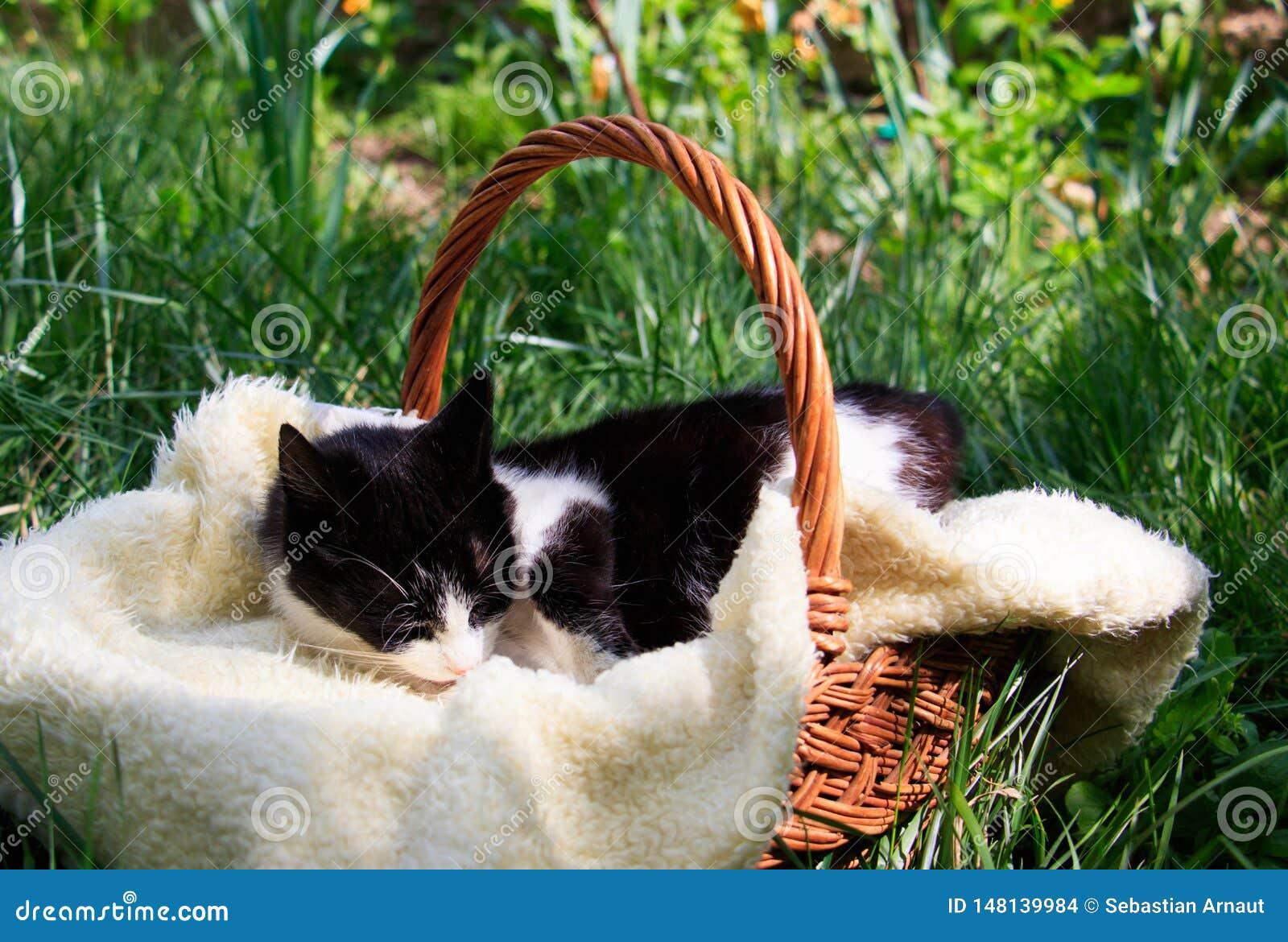 Un bello gatto bianco-nero che si trova in un canestro