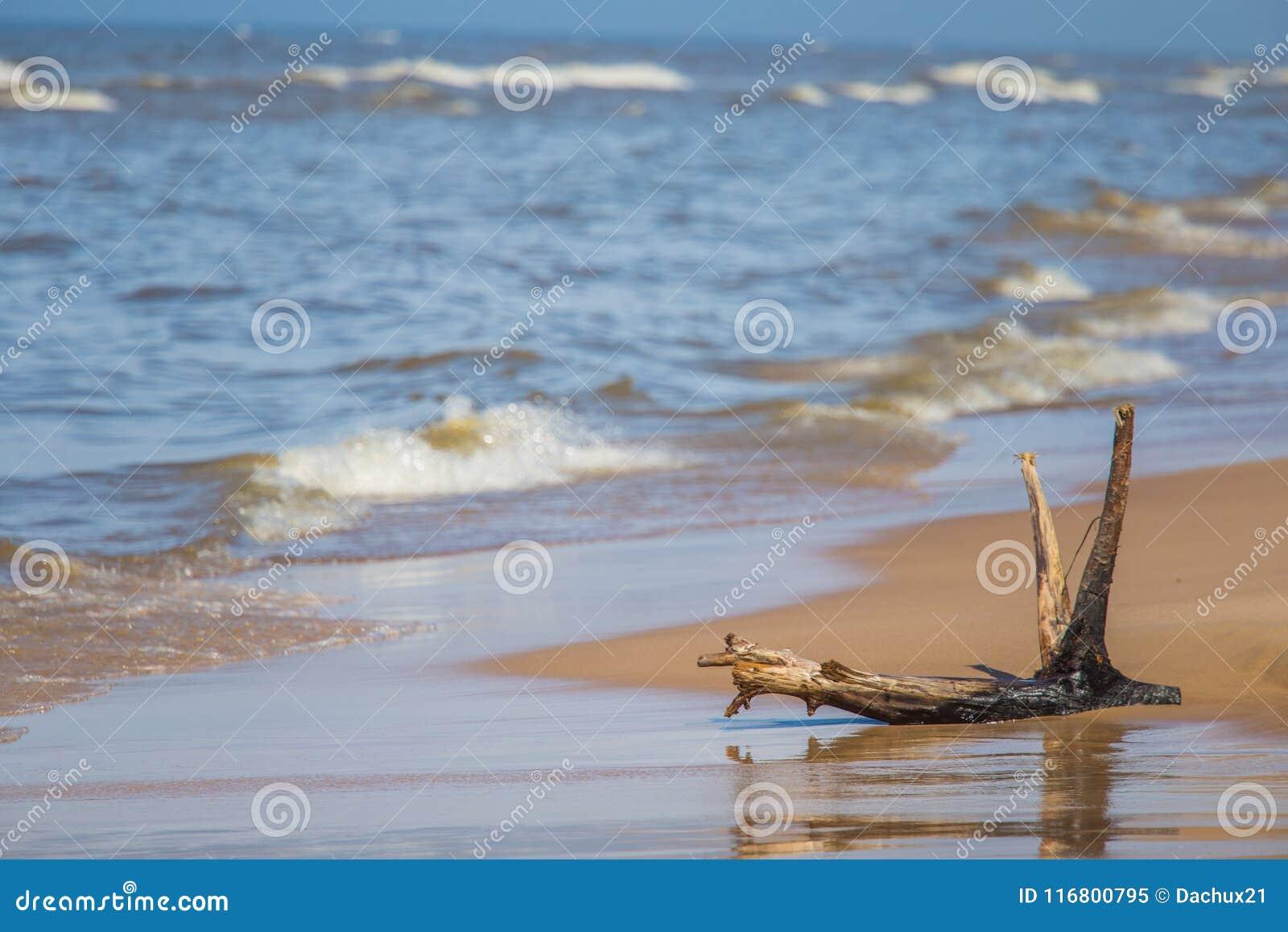 Un bello paesaggio della molla degli alberi di una costa del Mar Baltico nella spiaggia