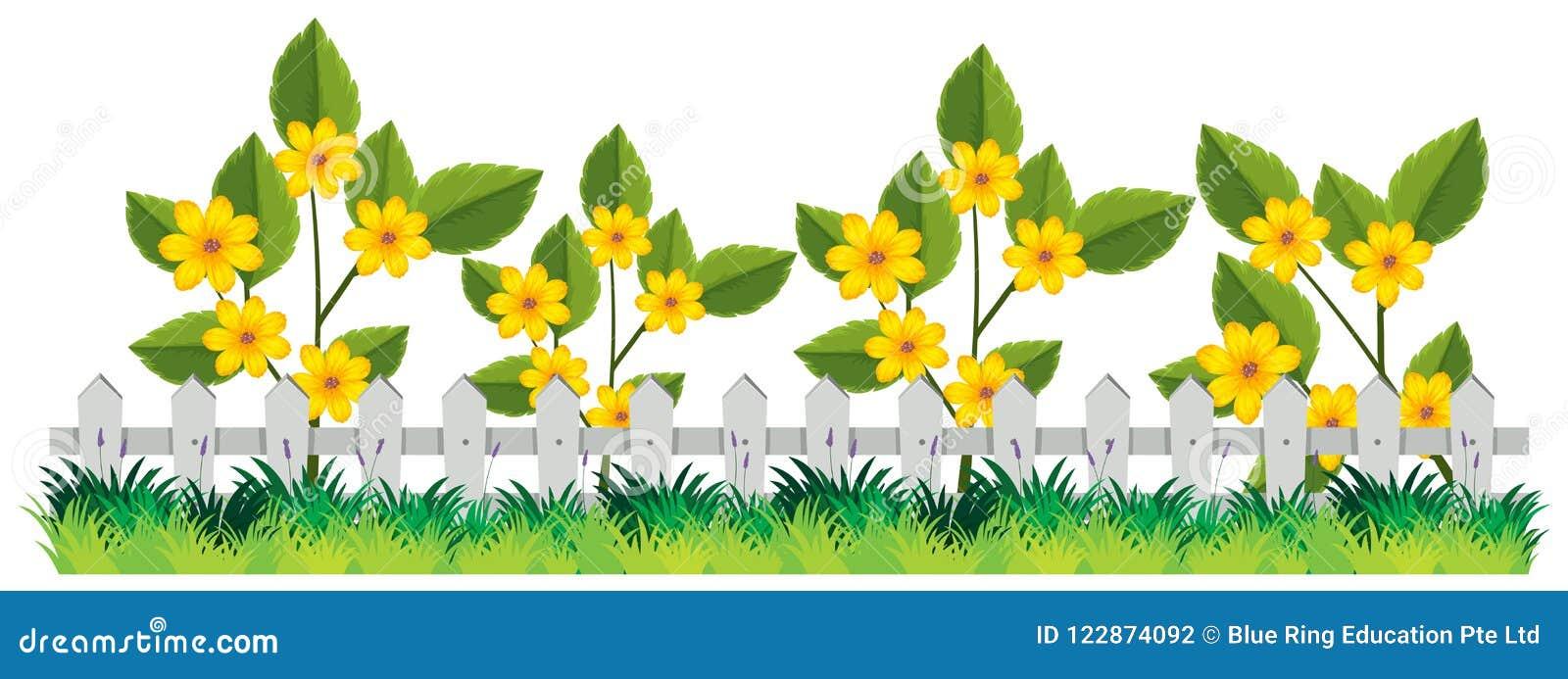 Un bello recinto del fiore