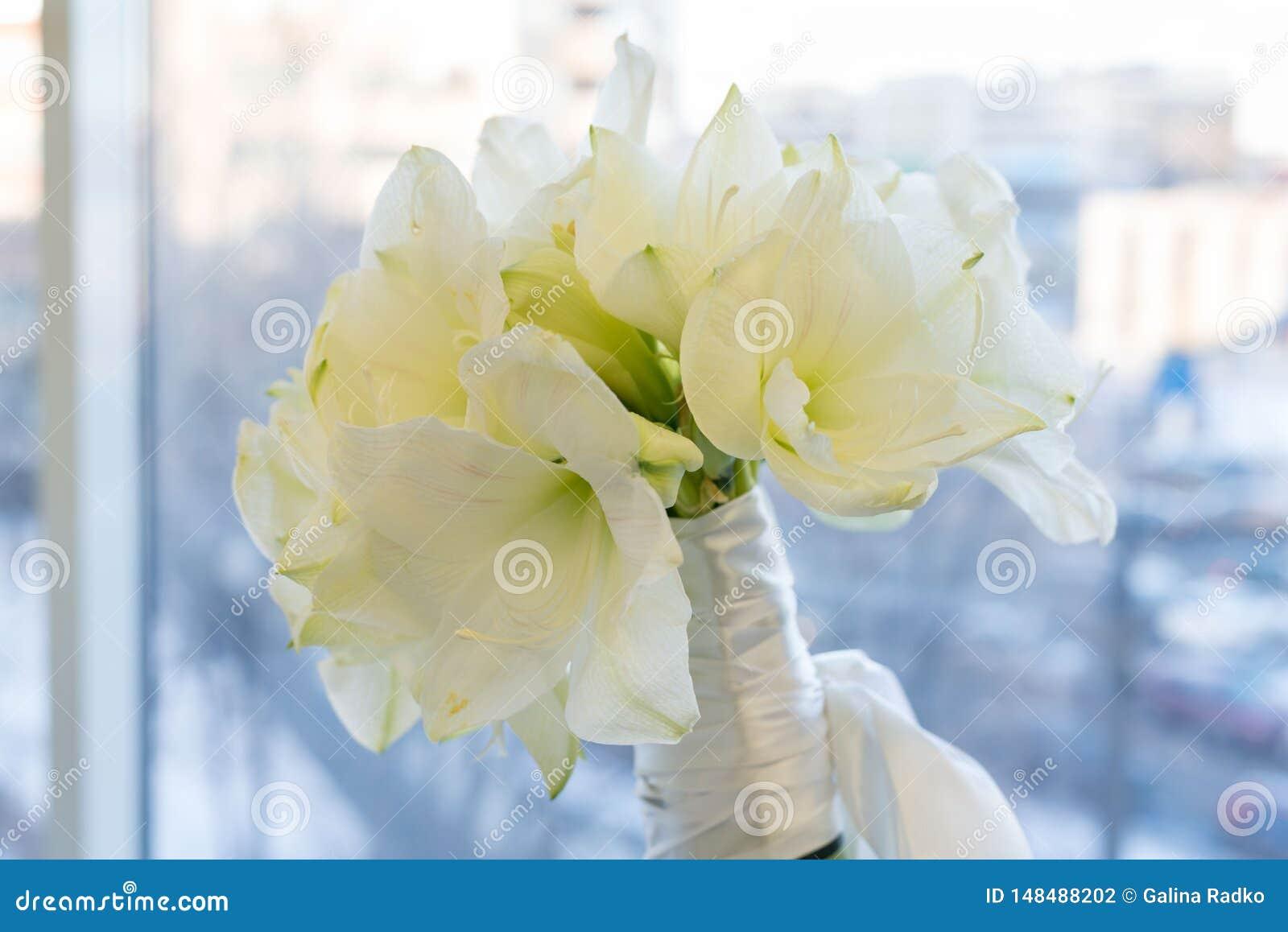 Un bouquet d Amarilis blanc Nuptiale, célébration et concept de Birhtday Fond