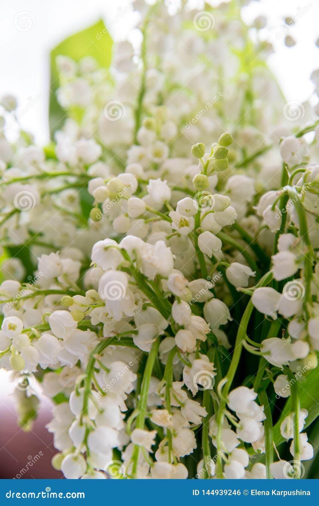 Un bouquet des lis de la vall?e sur un fond blanc