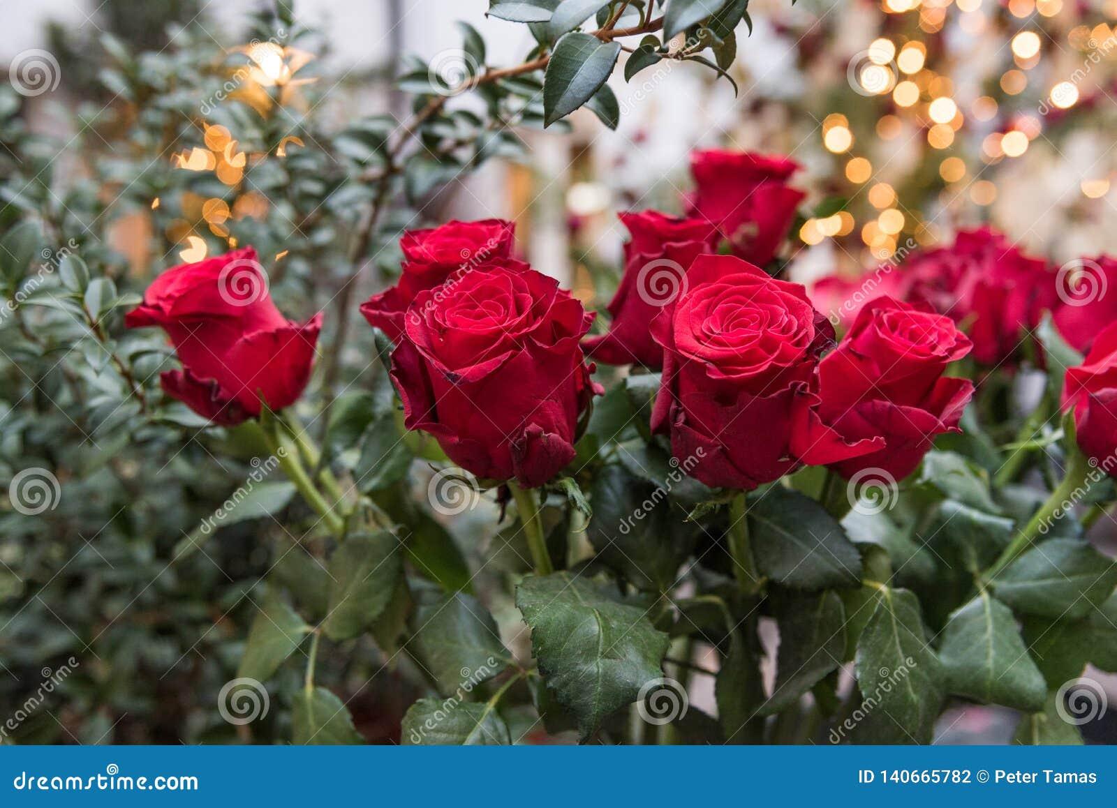 Un bouquet des roses rouges