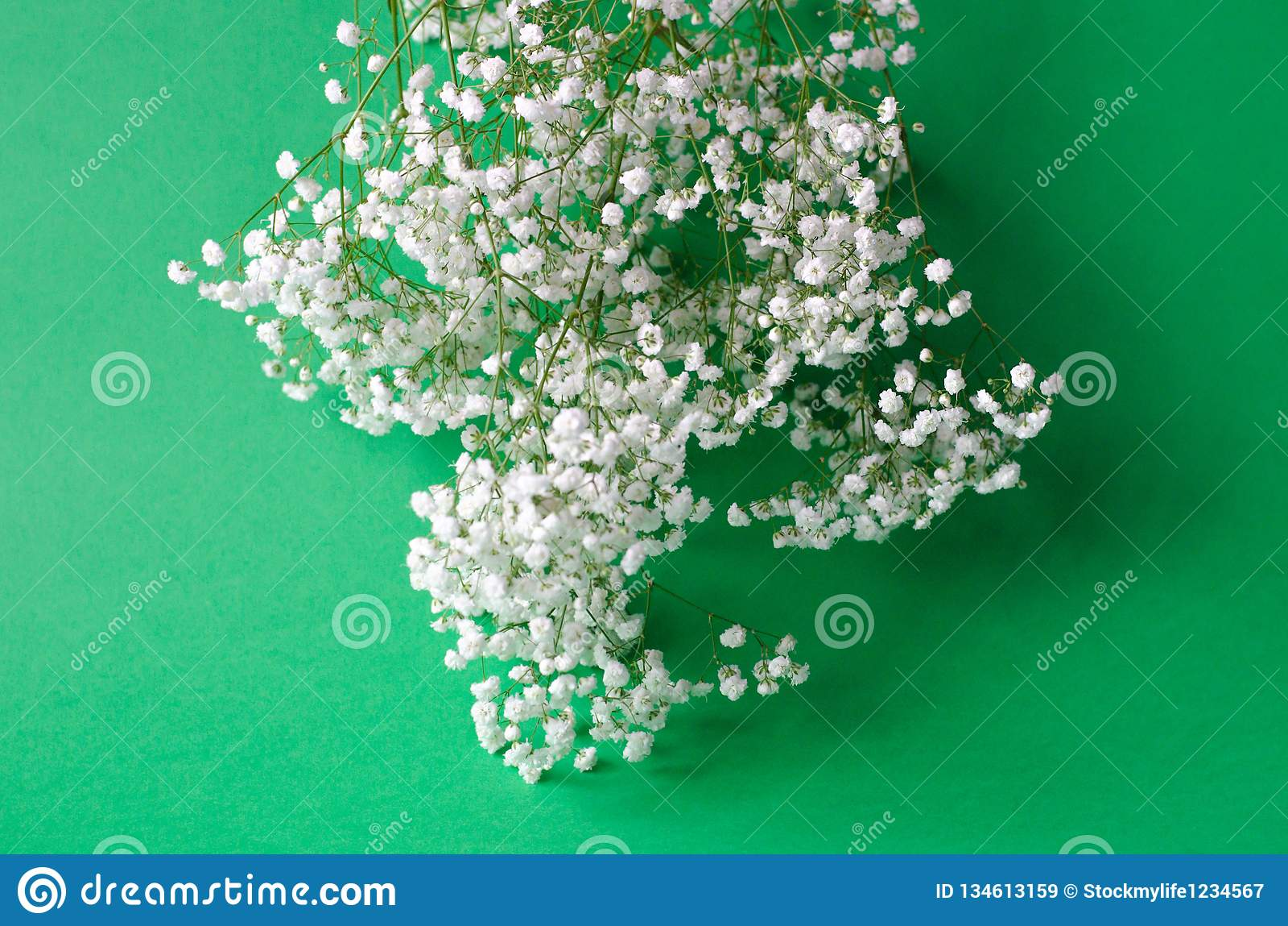 Un bouquet du gypsophila blanc sur un fond vert