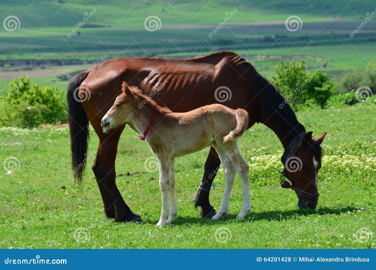 Un caballo con el bebé