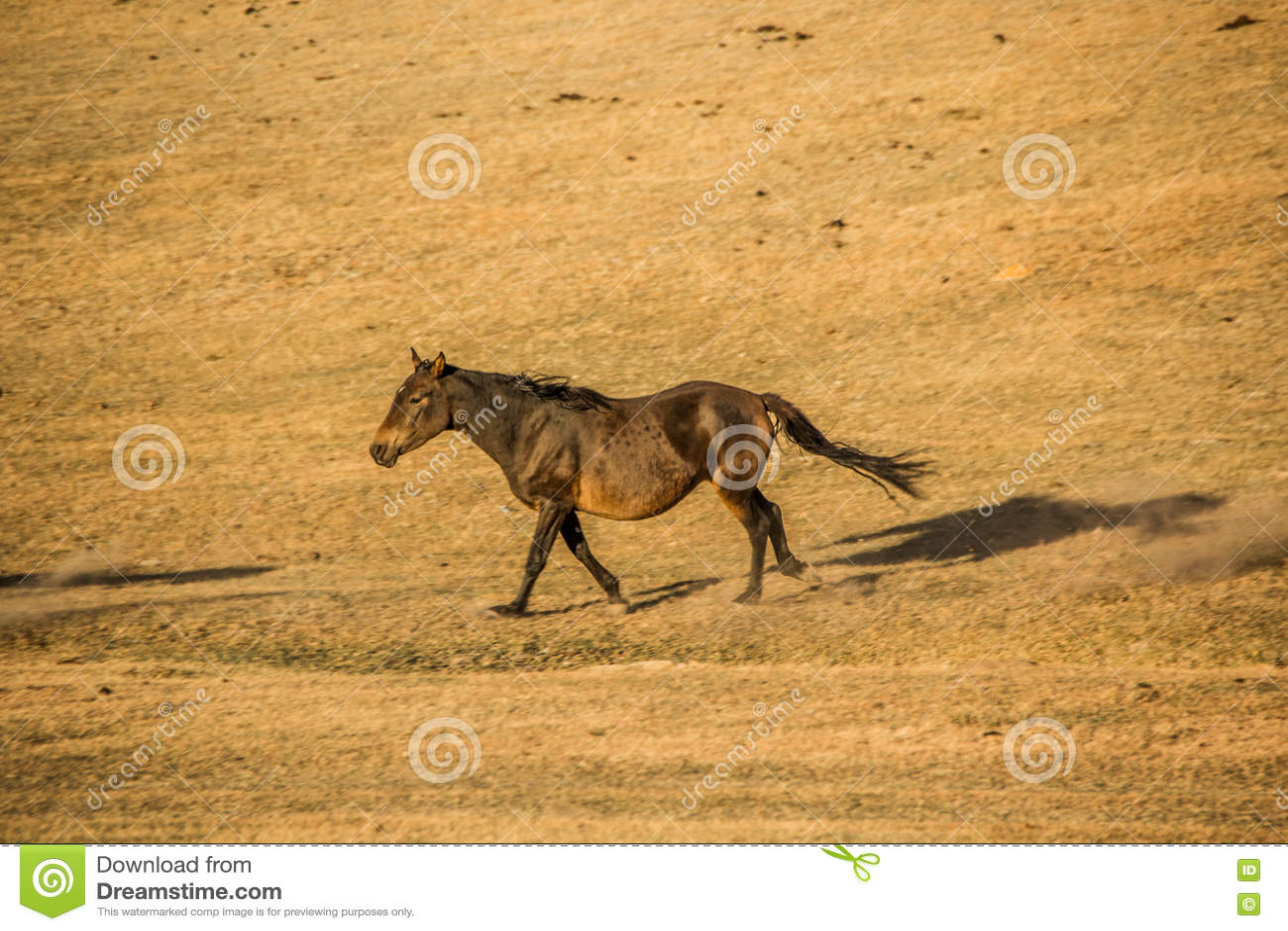 Un caballo en las montañas de Kirgiz